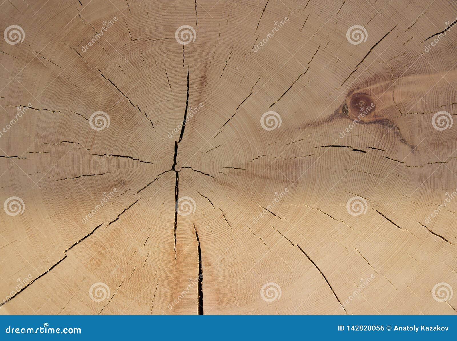 Klippa av forntida trä