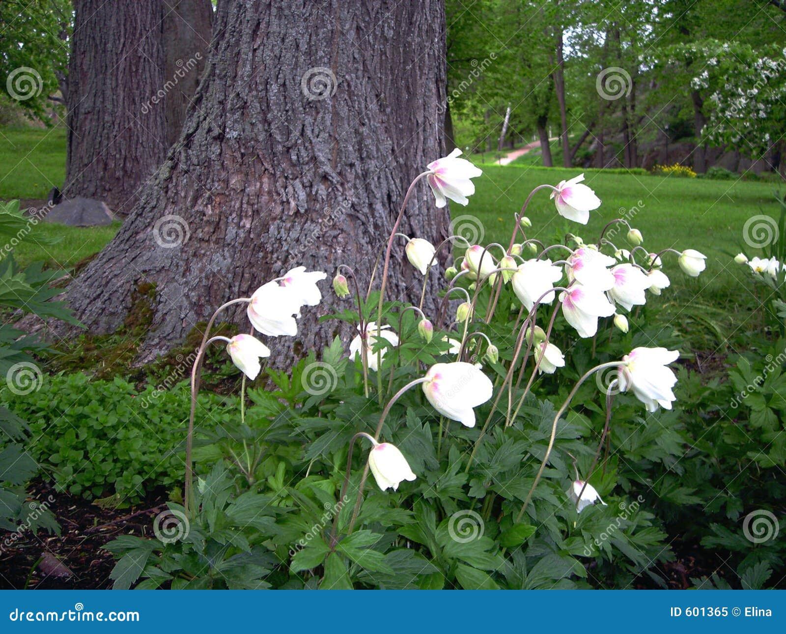 Klok - bloemen