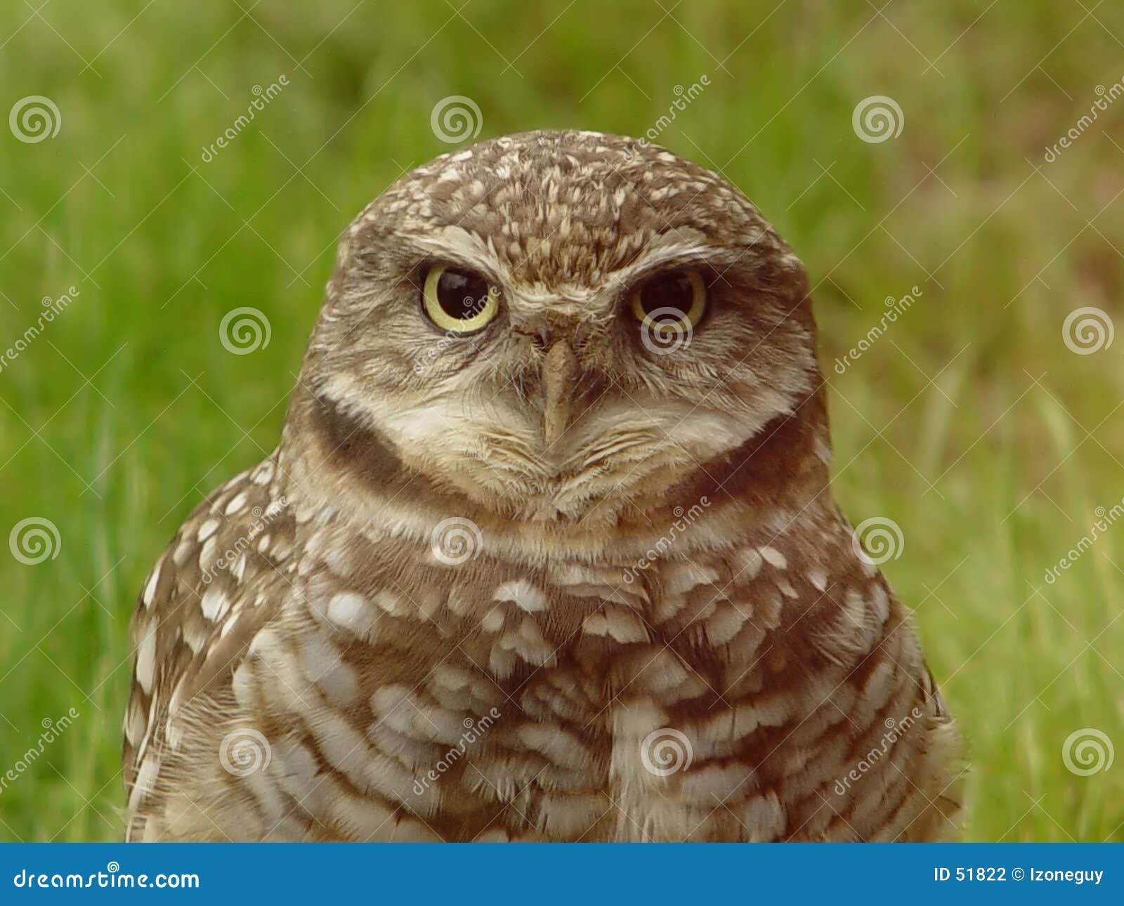 Klok gammal owl