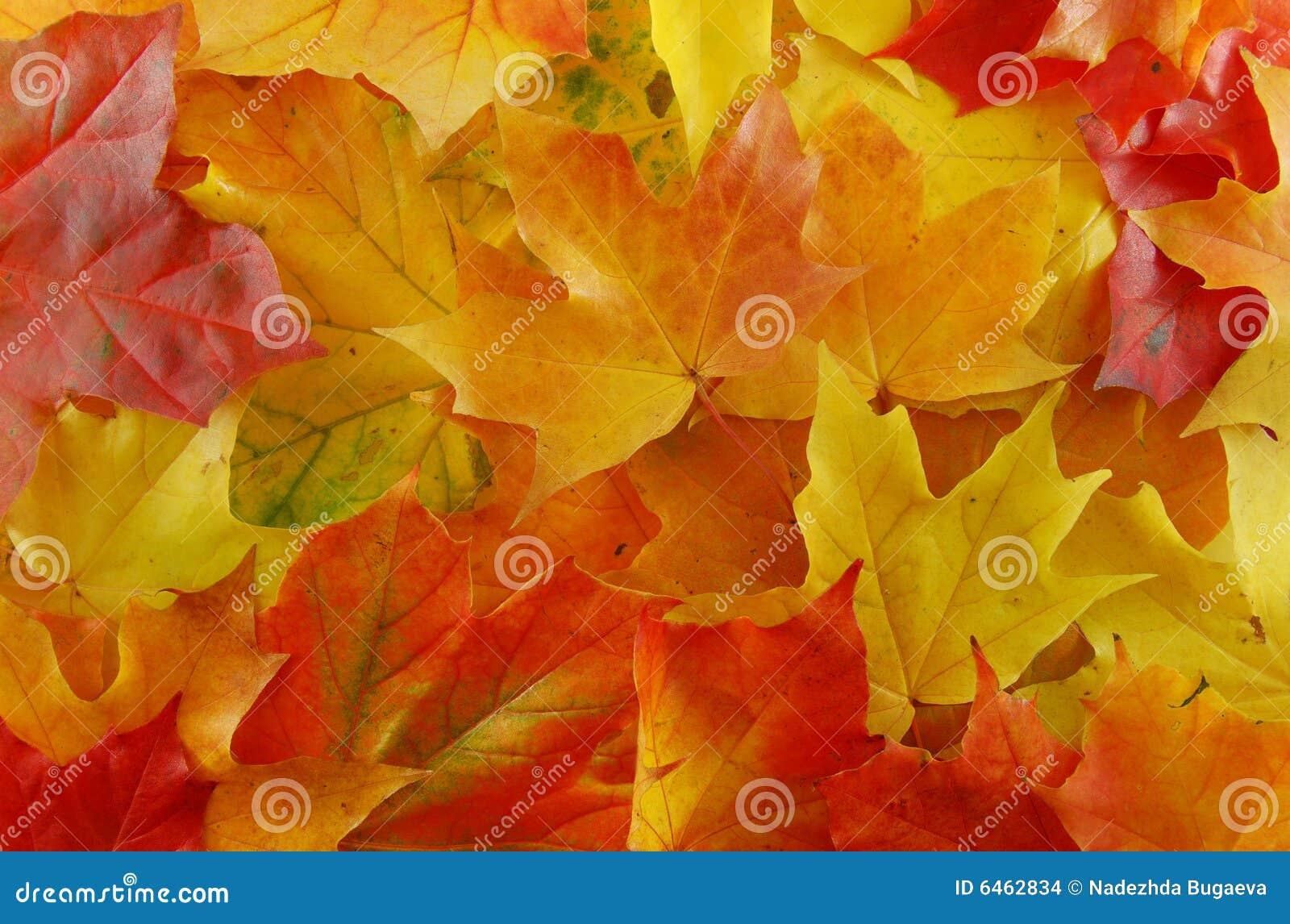 Klony liści