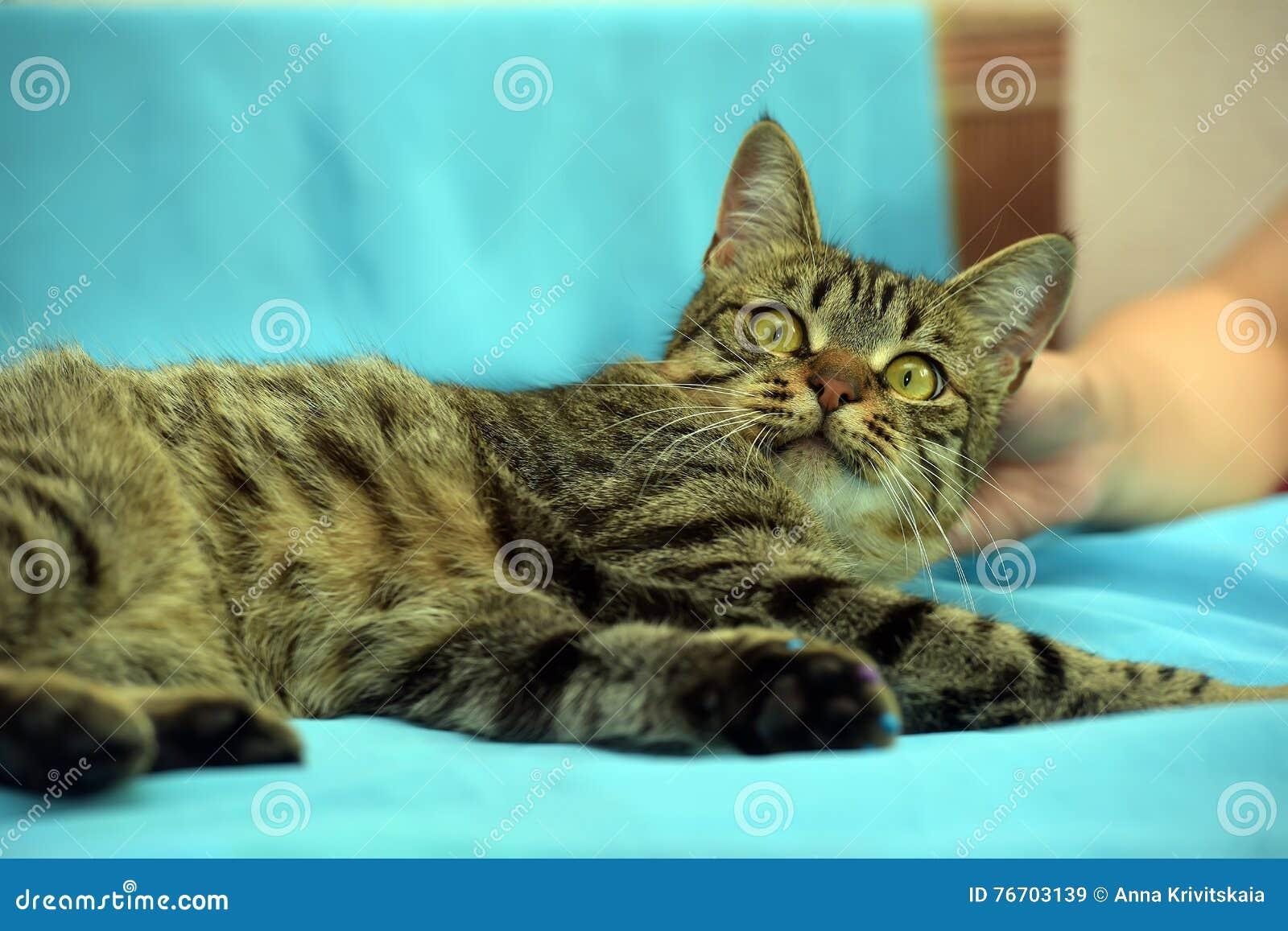 Knappe jonge gestreepte katkat