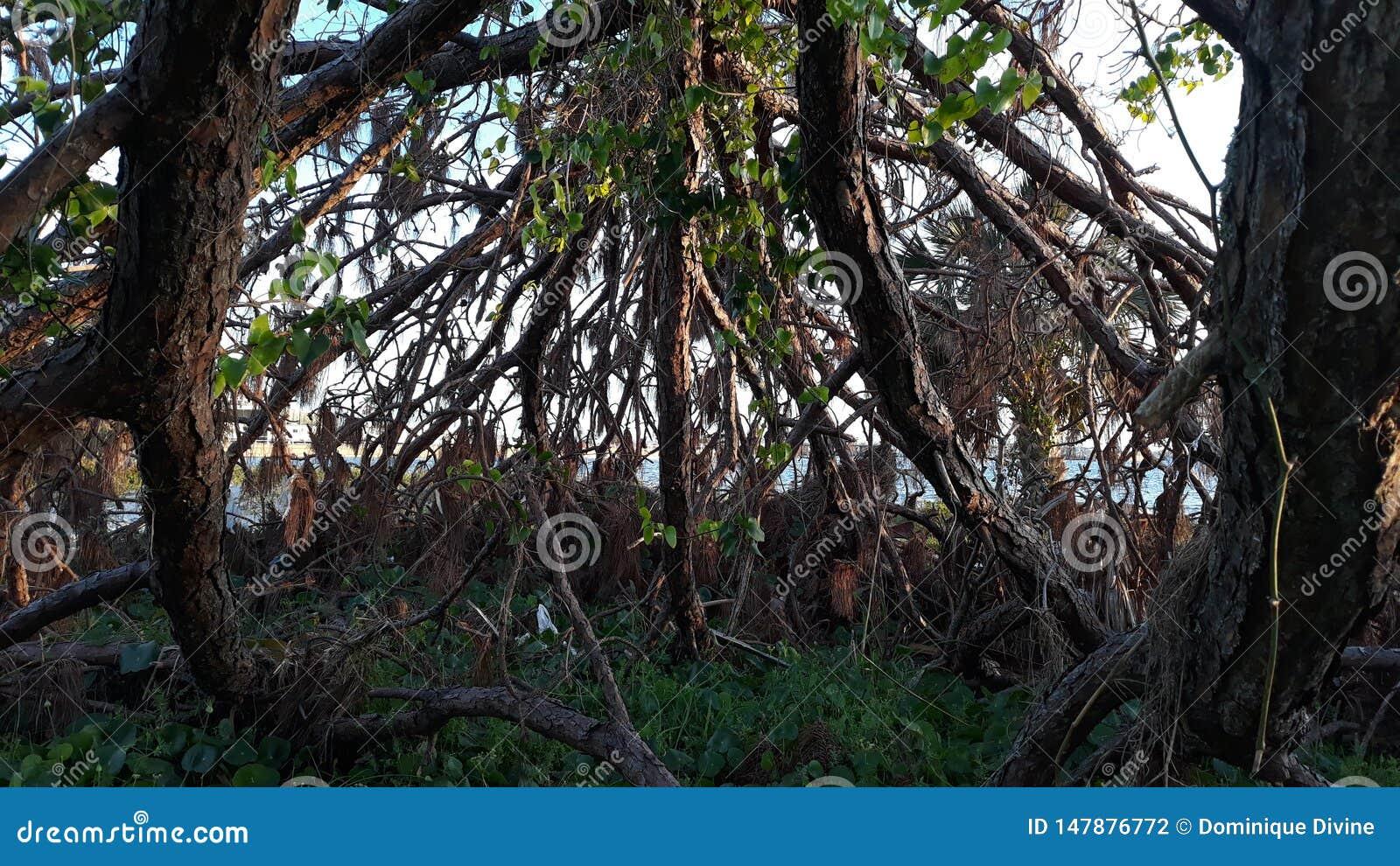 Knaprigt stupat träd