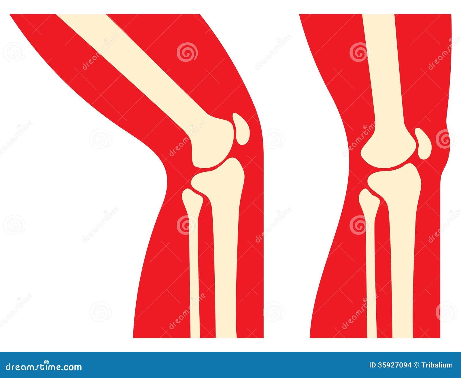 Knee anatomy stock photo image of operation health 35927094 knee anatomy ccuart Choice Image