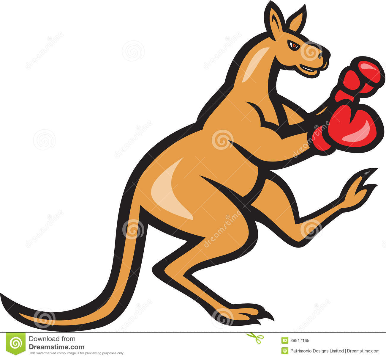 Boxing Kangaroo Images amp Stock Pictures Royalty Free