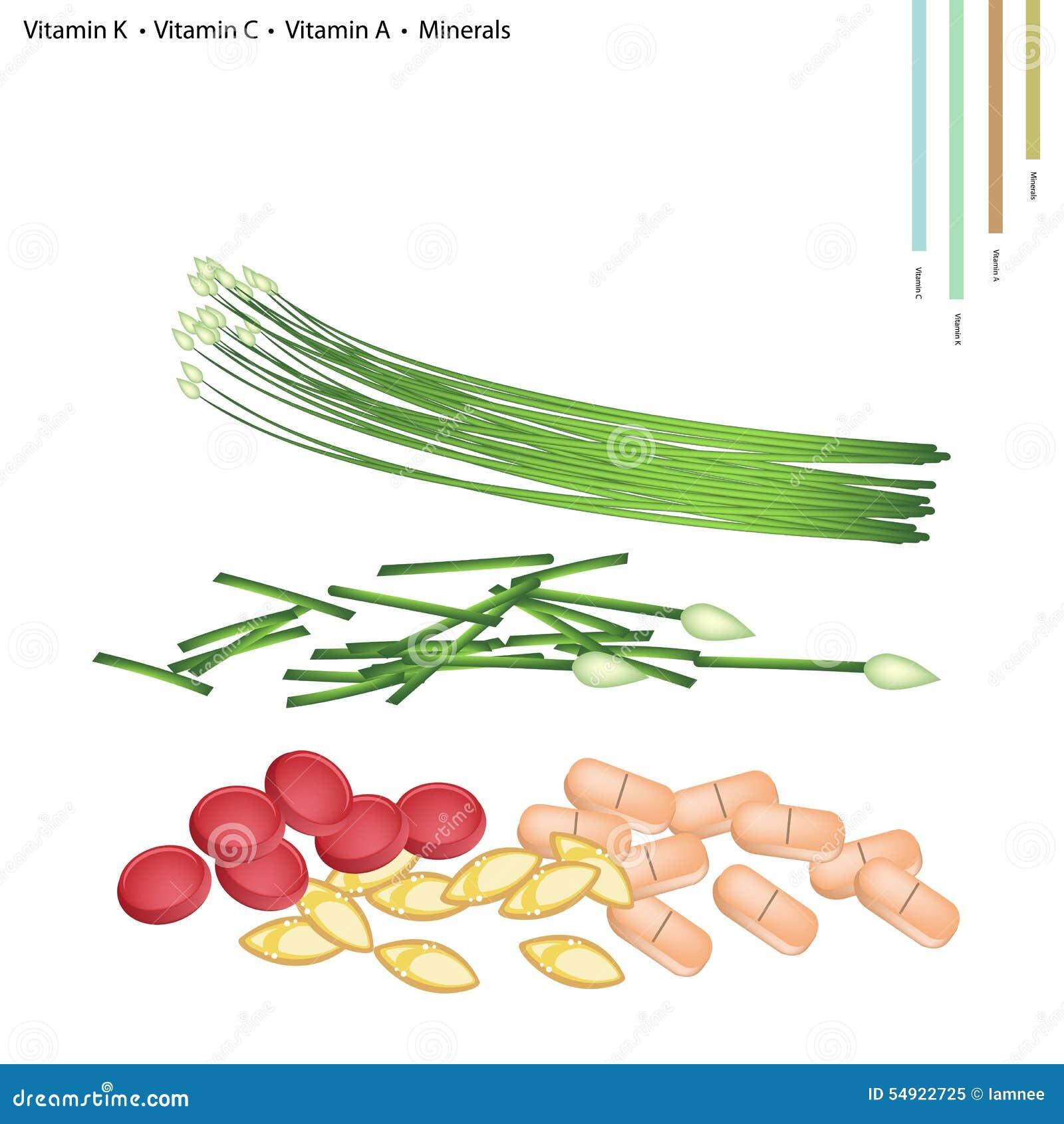 Knoblauch Schnittlauche Mit Vitamin K C A B9 Und Mineralien Afolat Gesundheitswesen Konzept Illustration Von Schnittlauchen Folat Oder Tablet