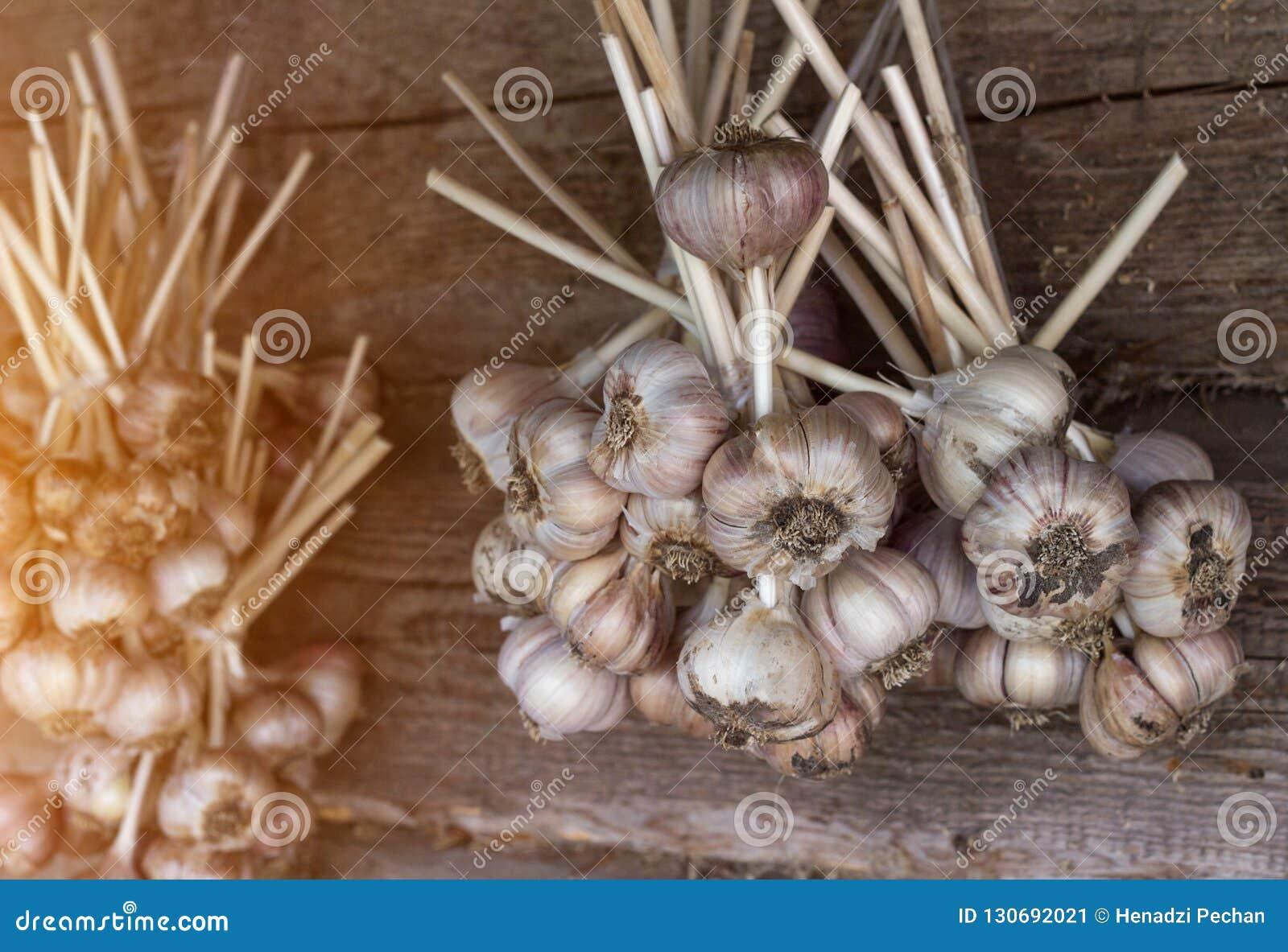 Knoflookbundels die op houten achtergrond, het close-up van knoflookbundels, aromatische zon hangen,