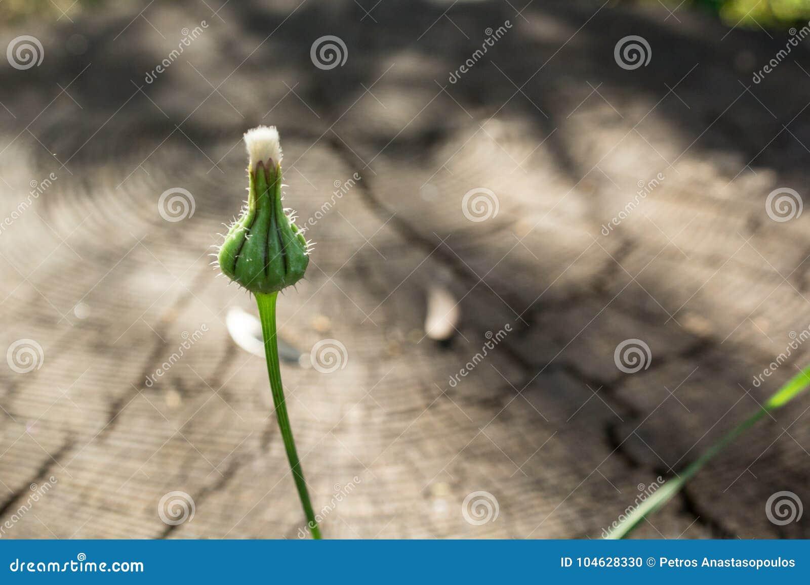 Download Knop stock foto. Afbeelding bestaande uit hout, close - 104628330