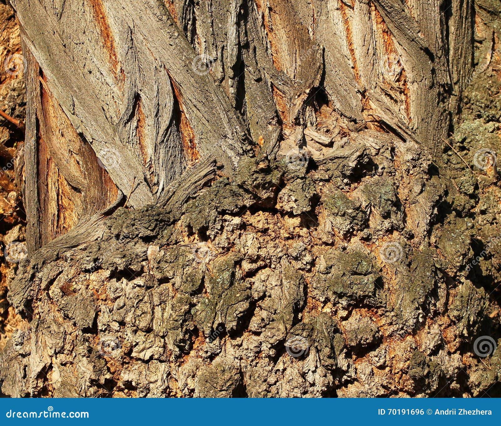 Knotig closeup för textur för trädstam