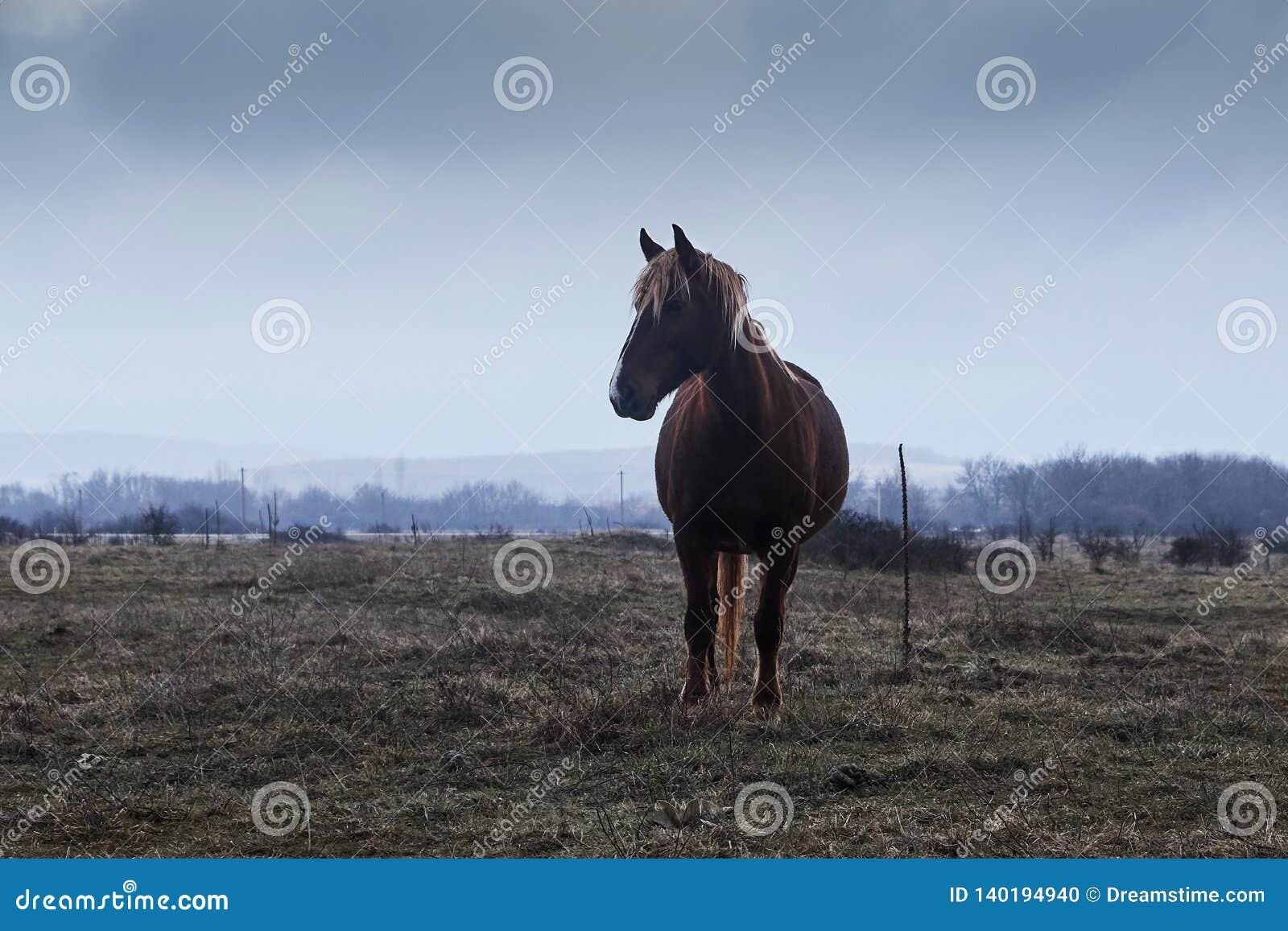 Koń w mgle,