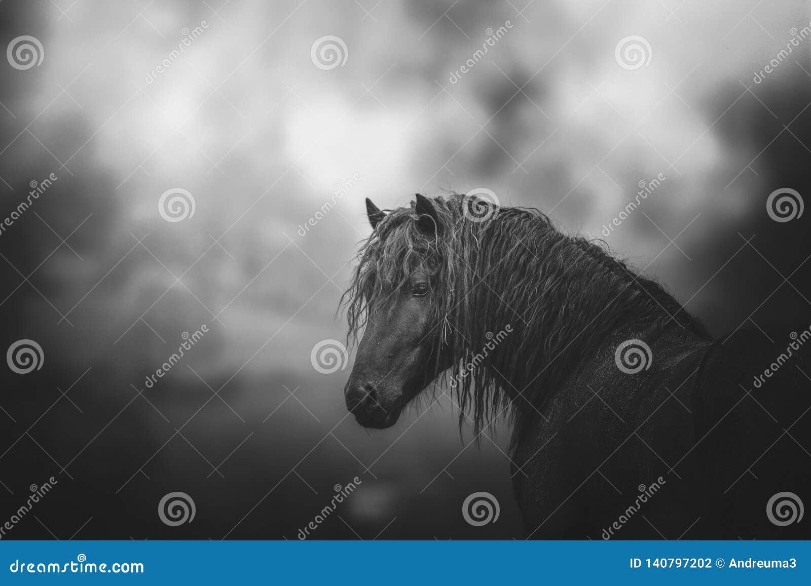 Końska czarny i biały fotografia