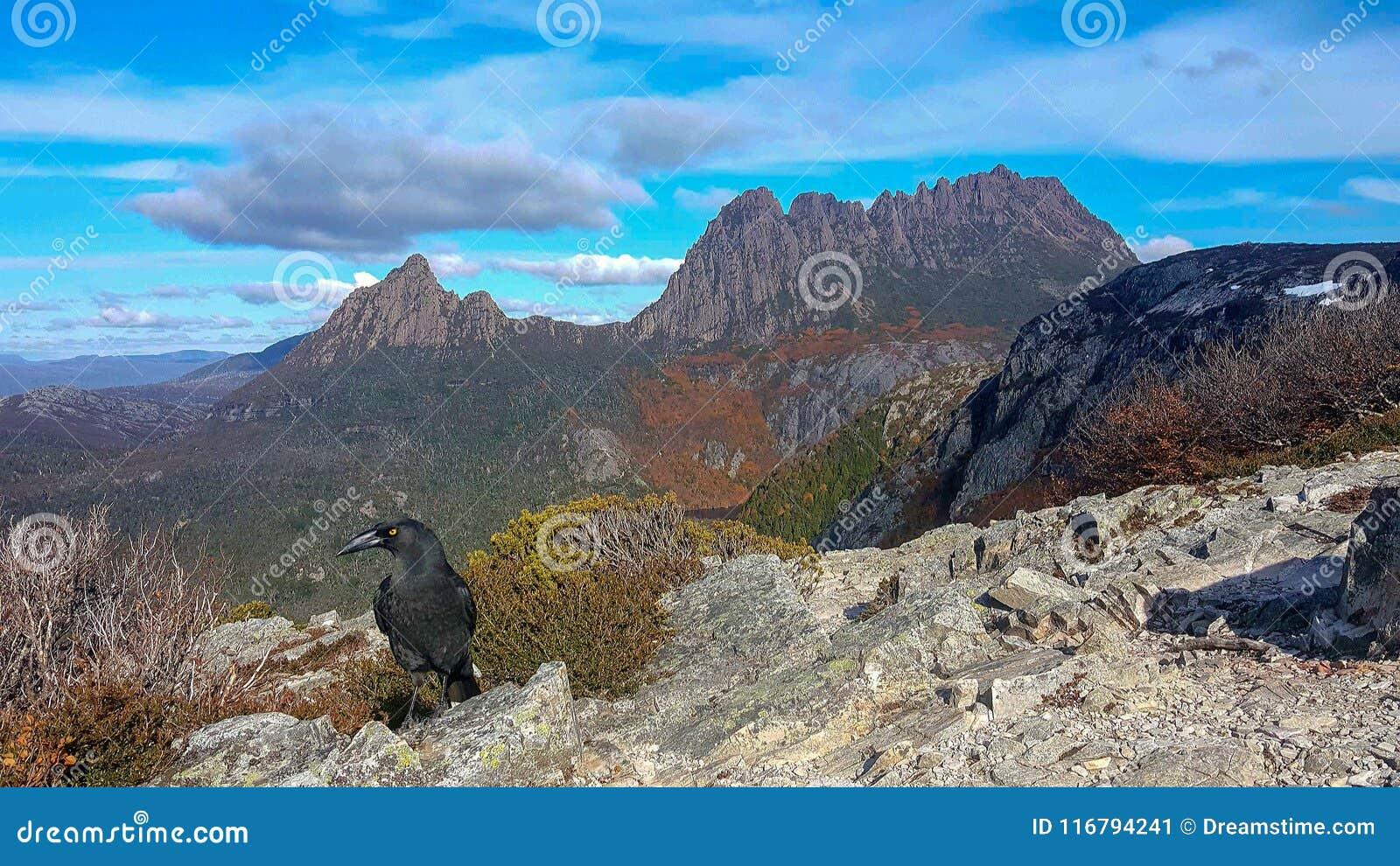 Kołysankowa góra i czarny currawong ptak