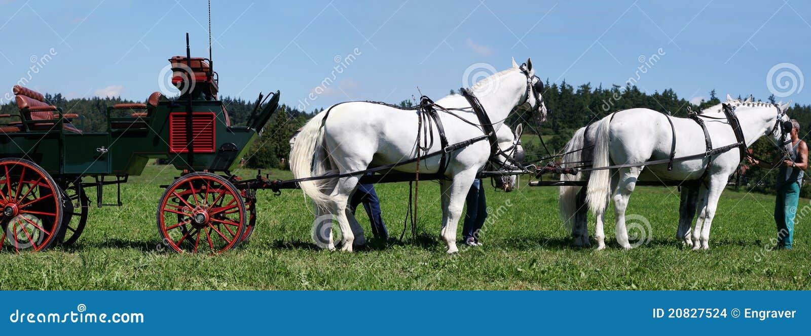 Koń drużyna