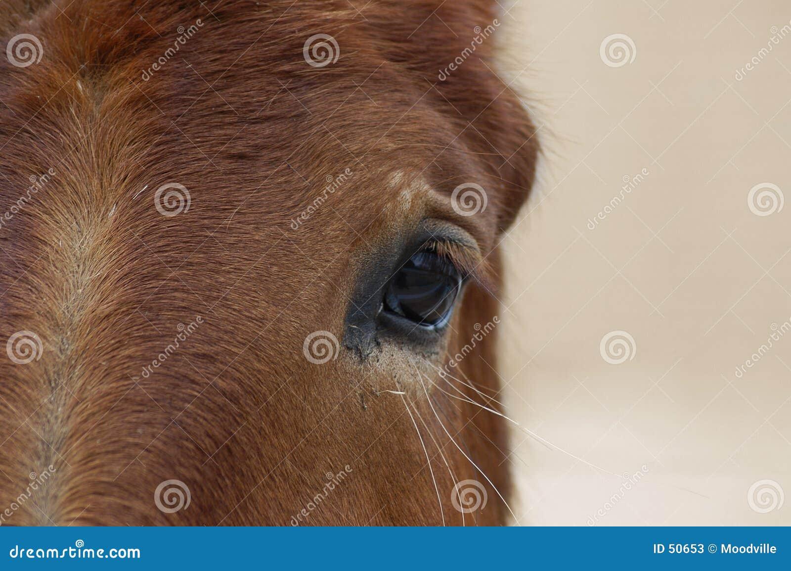 Koń jest głównym