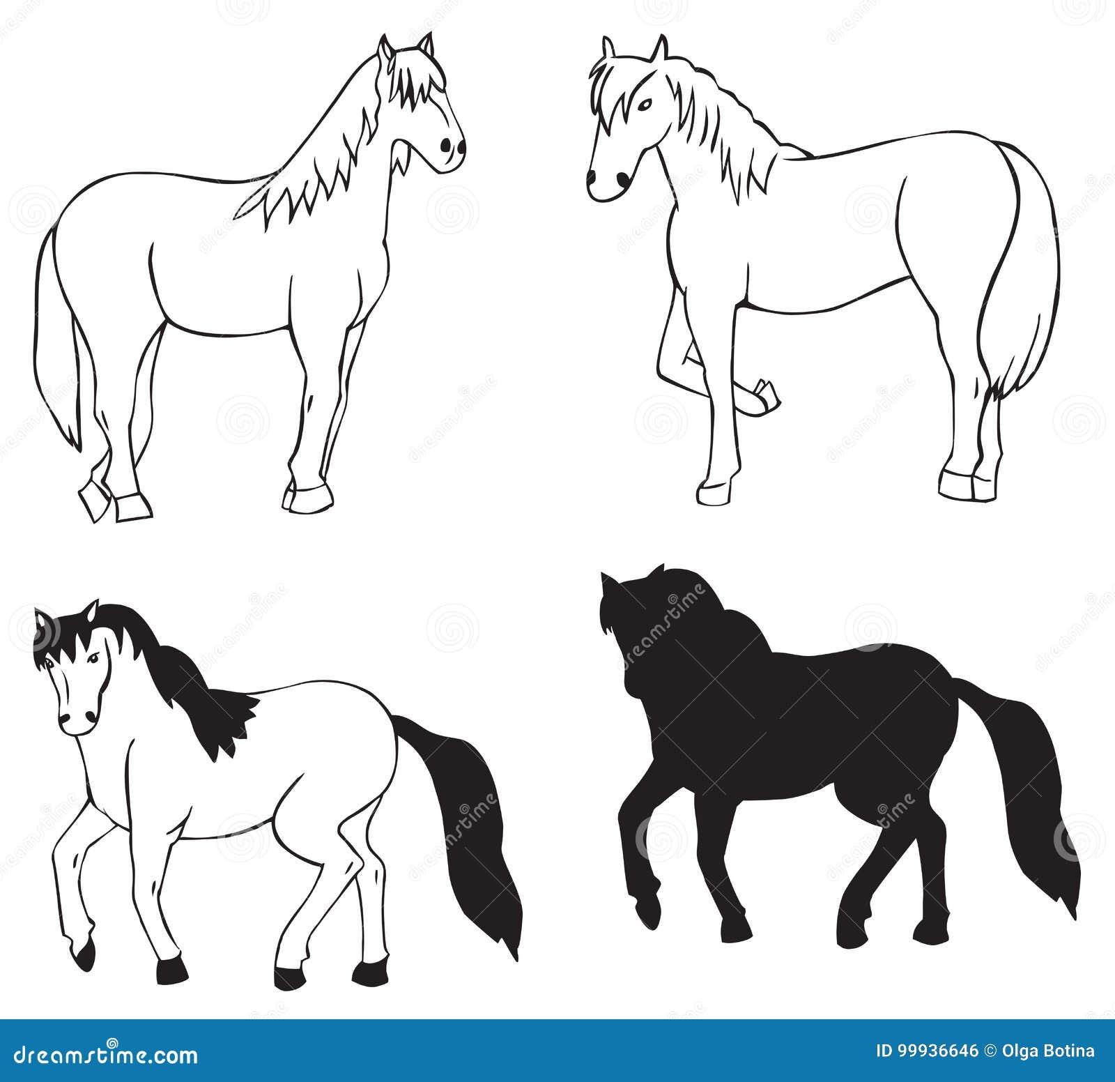 Koń na białym tle