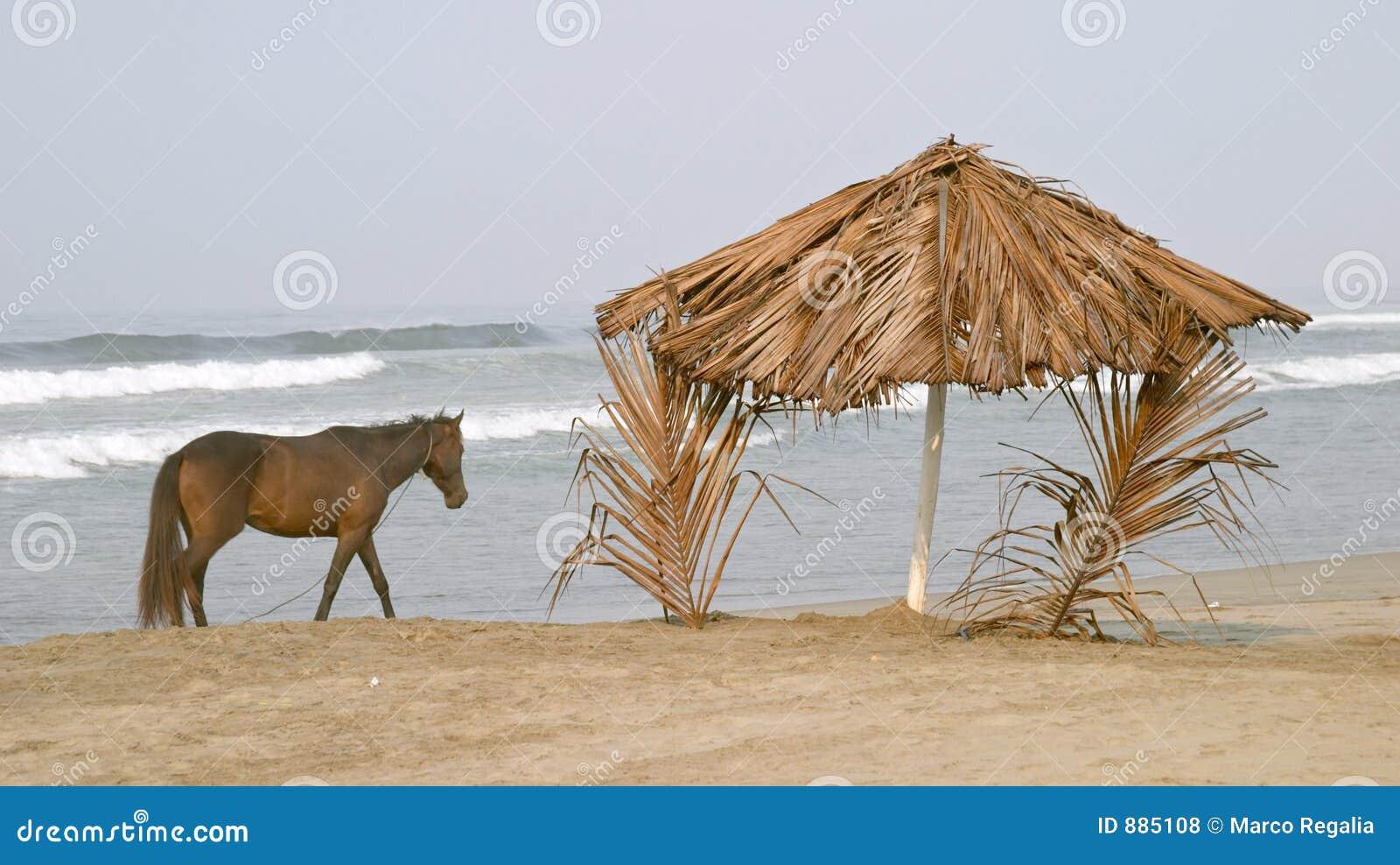 Koń na plaży obozu