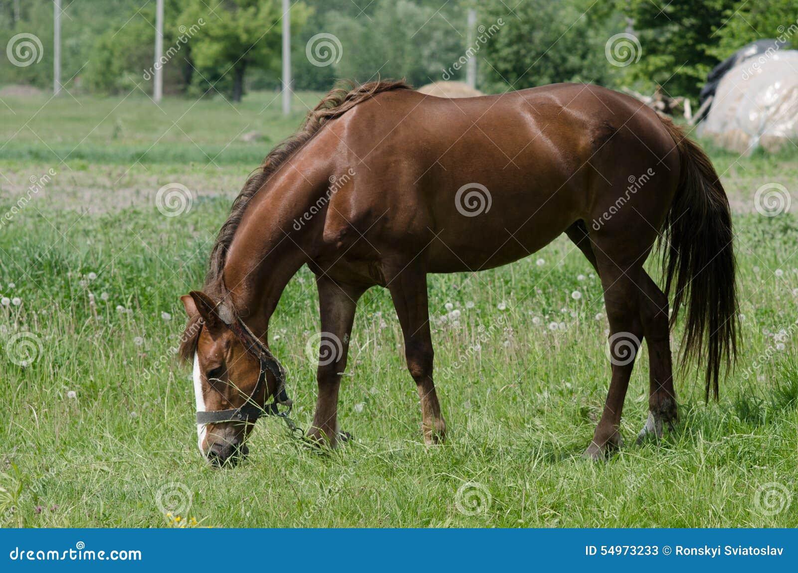 Koń pasa