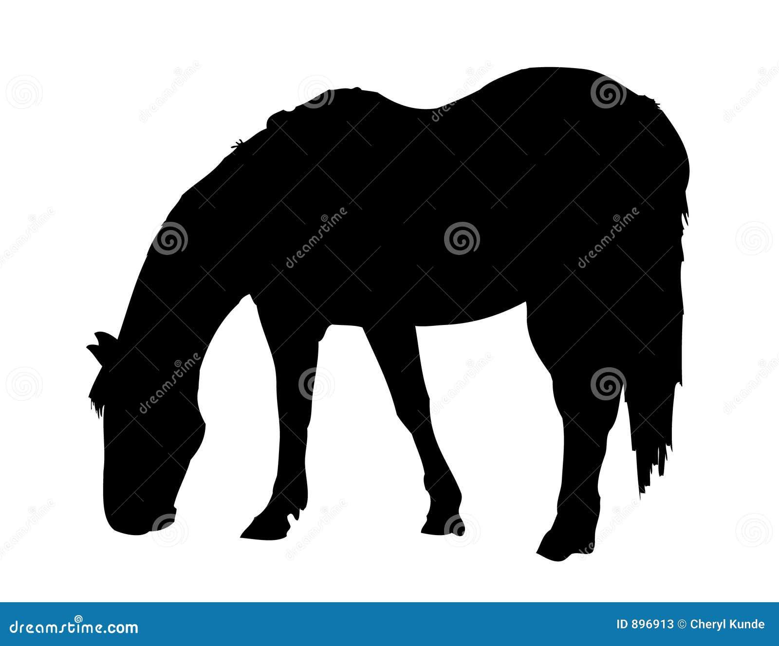 Koń pastwiskowy