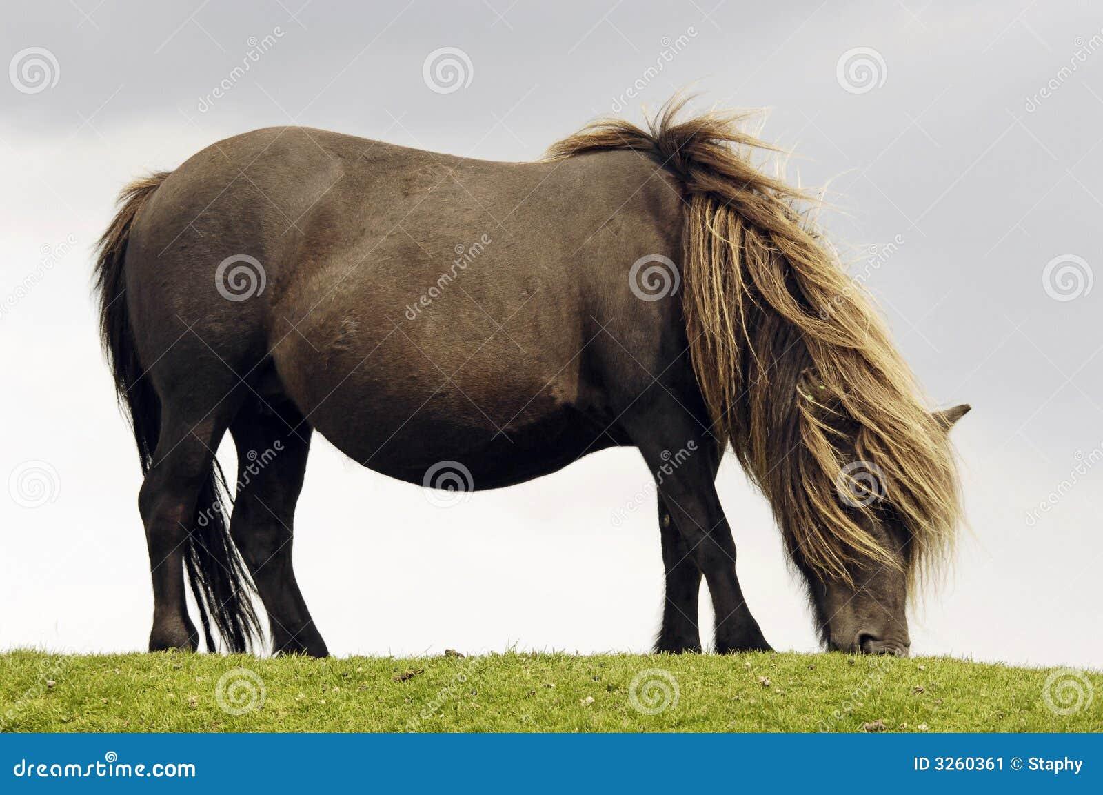 Koń się wolny