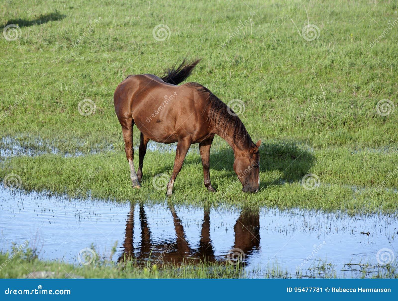 Koń strumieniem
