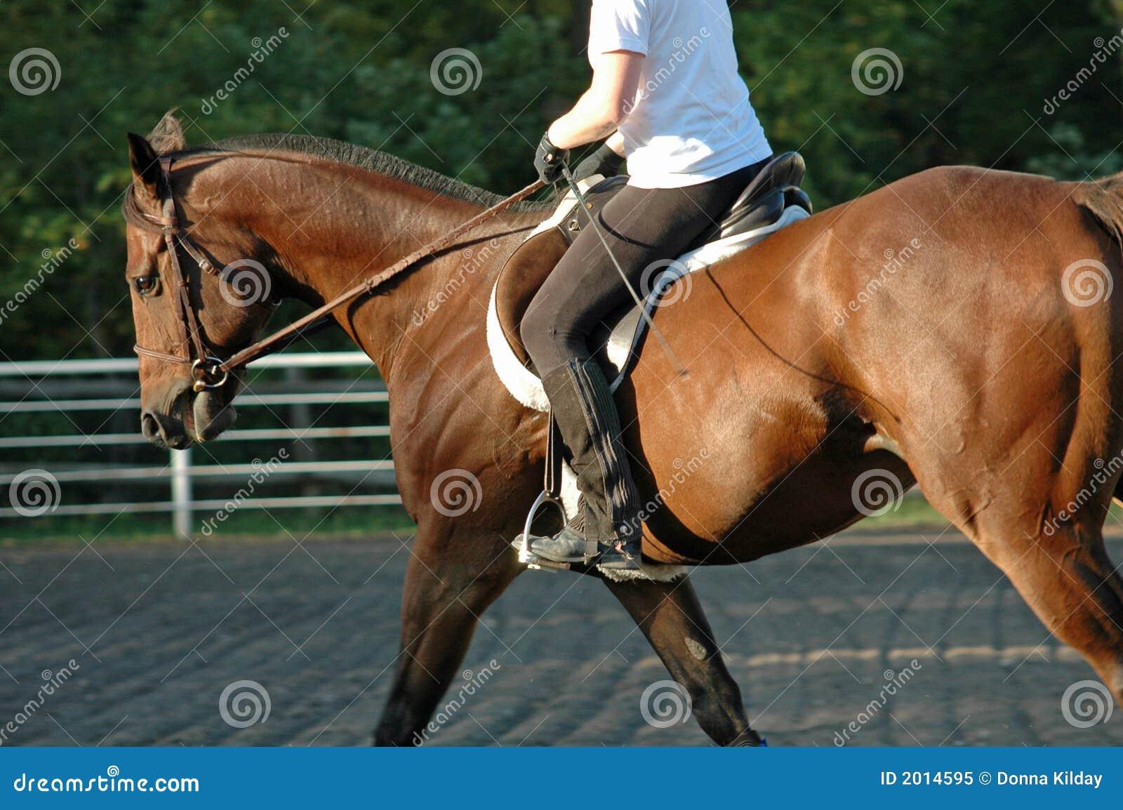 Koń szkolenia