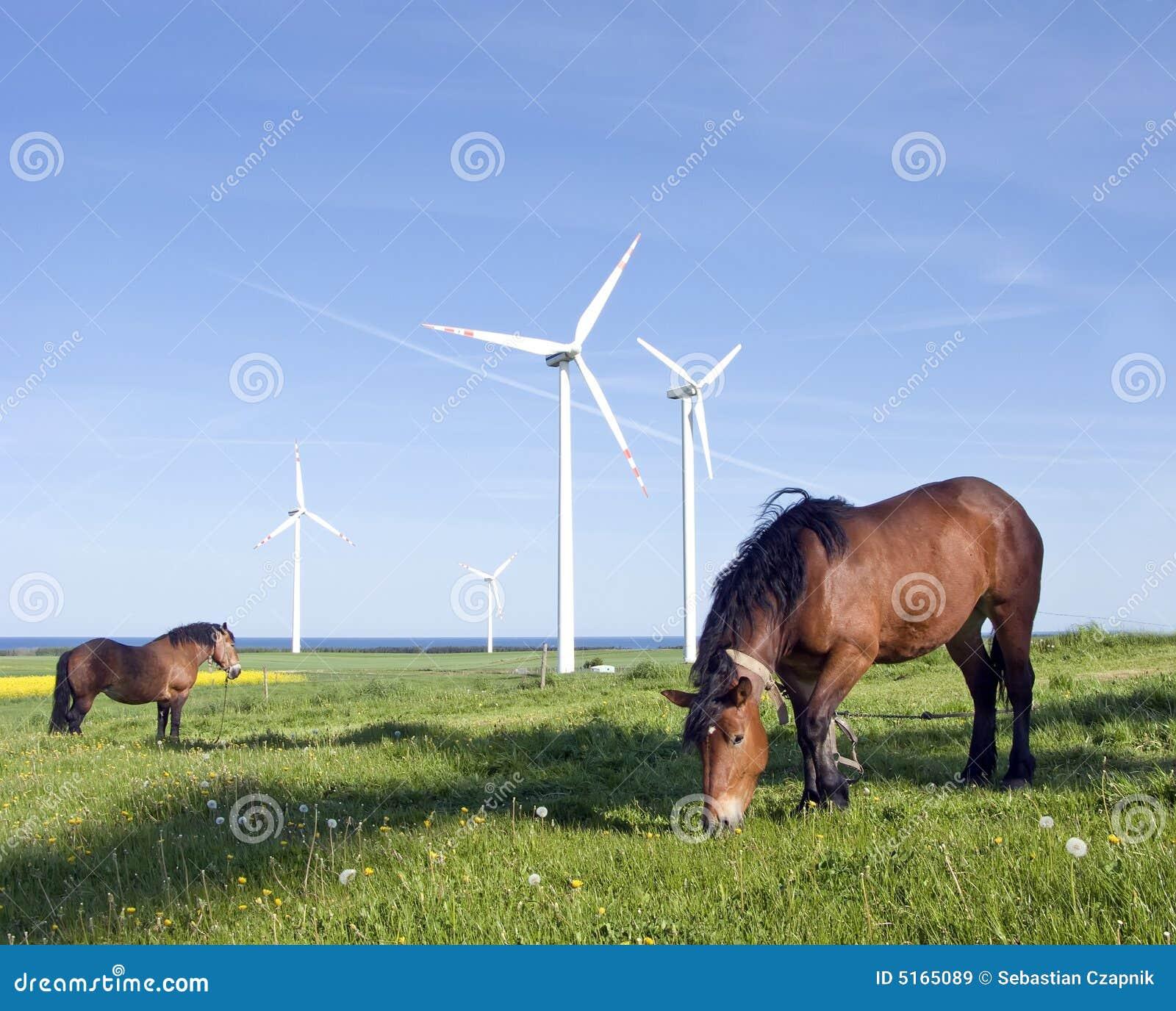 Koń turbiny wiatr