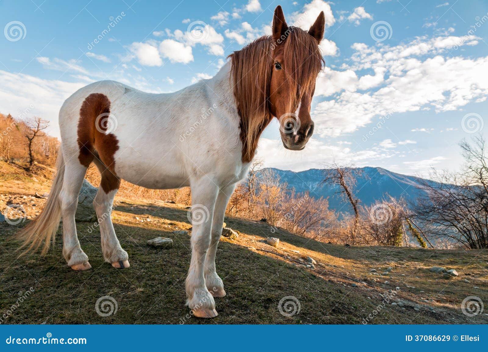 Download Koń w łąkowej górze obraz stock. Obraz złożonej z wielki - 37086629