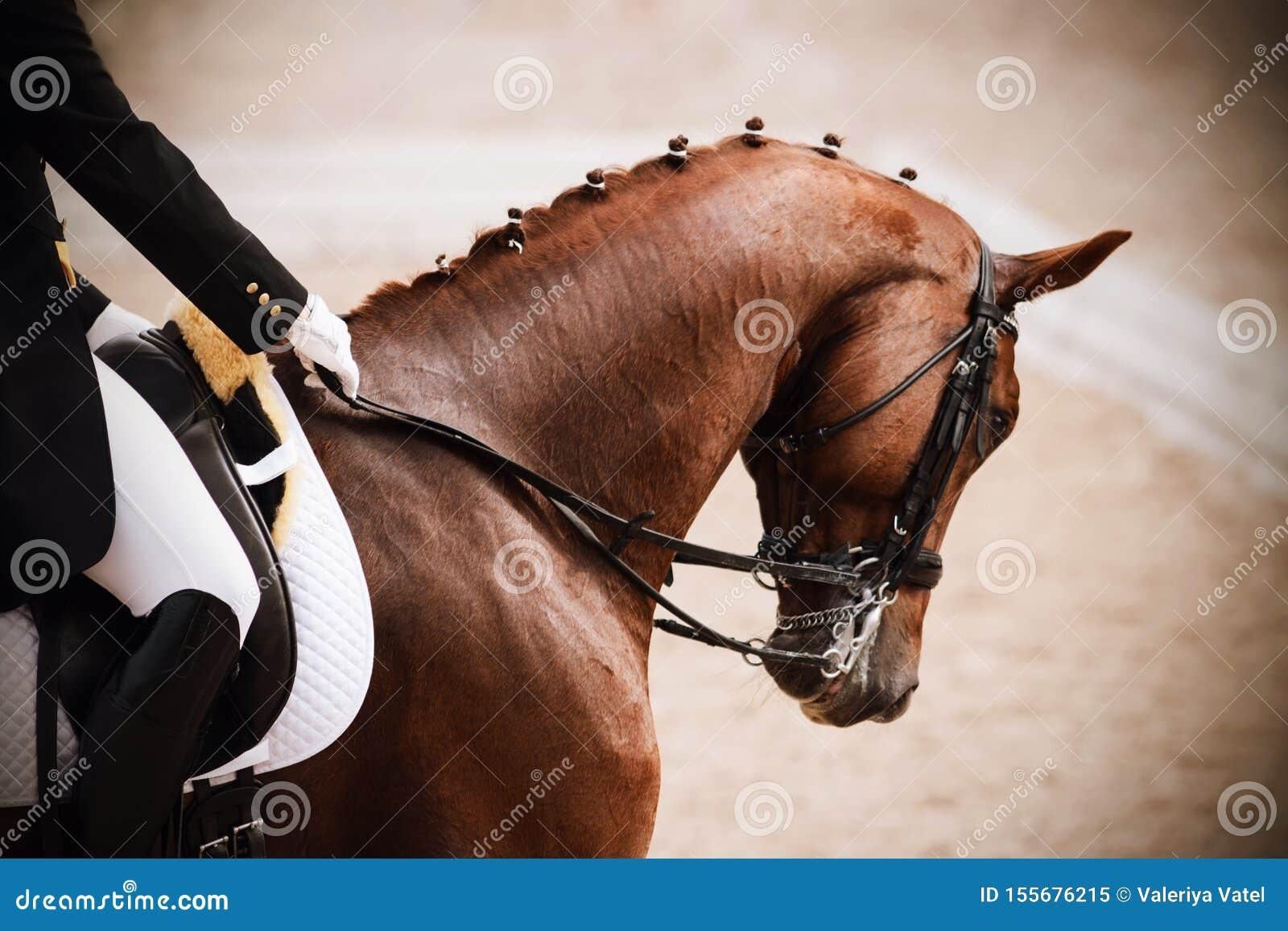Koń z jeźdzem w comberze uczestniczy w dressage rywalizacjach