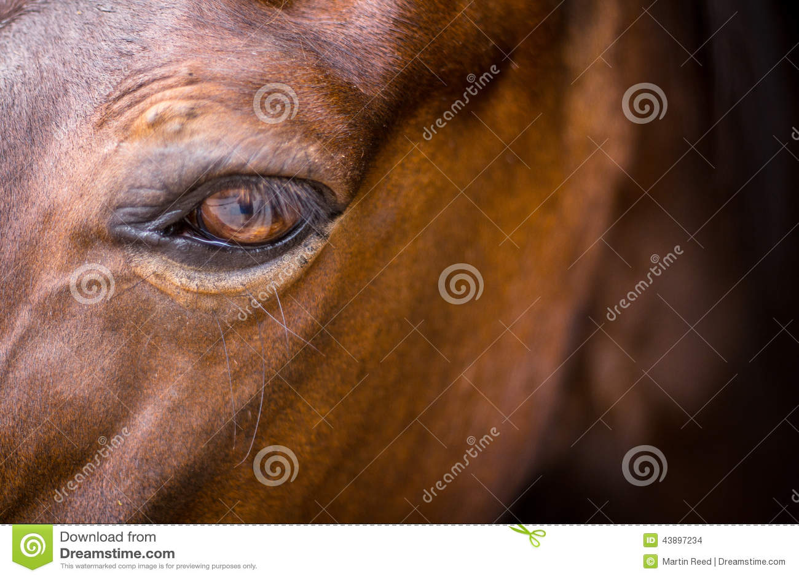 Końska głowa - zakończenie oko