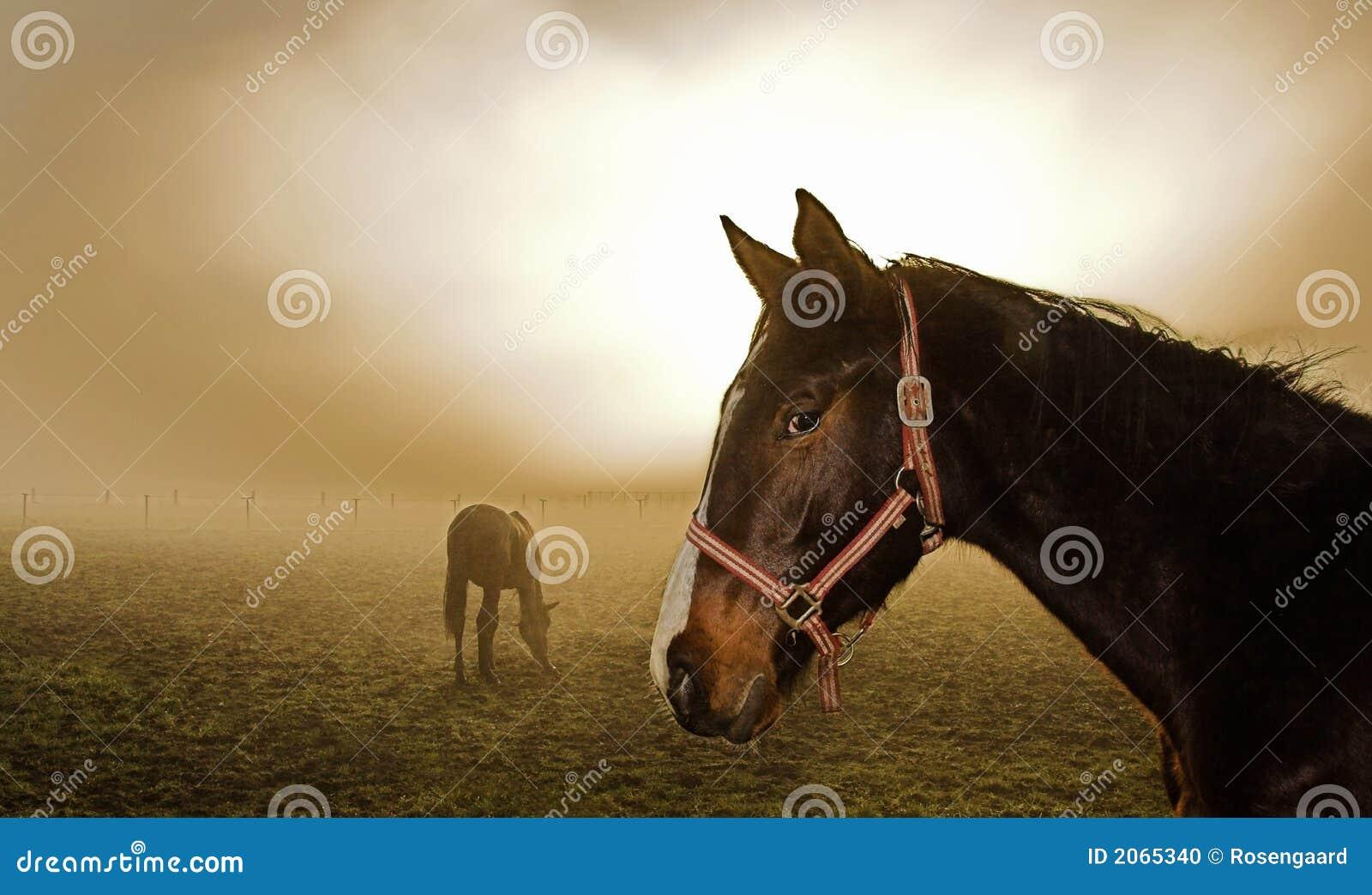 Końska mgła.