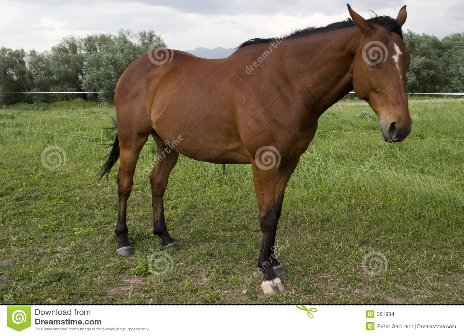 Końska stanowisko