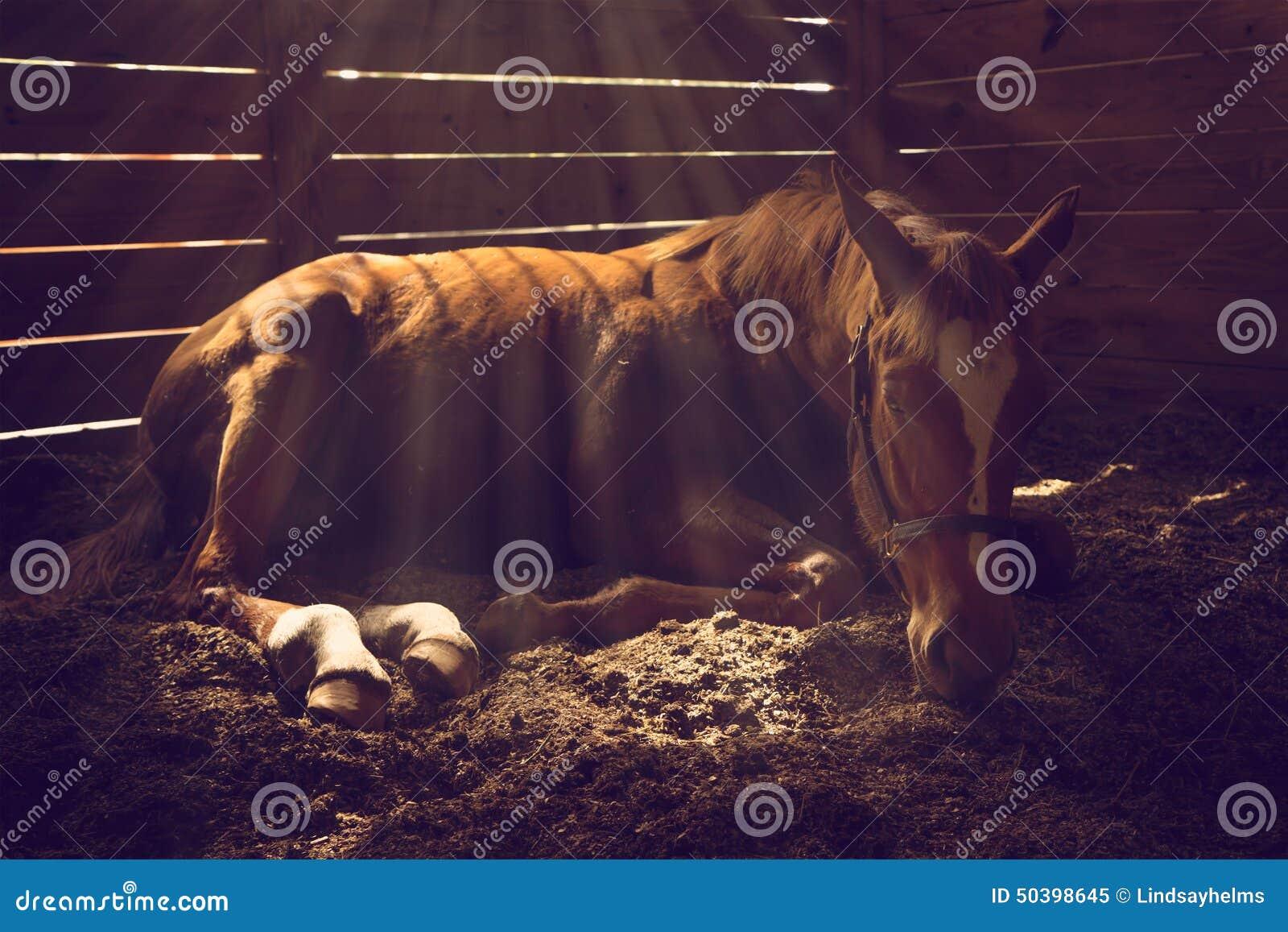 Koński łgarski puszek w kramu