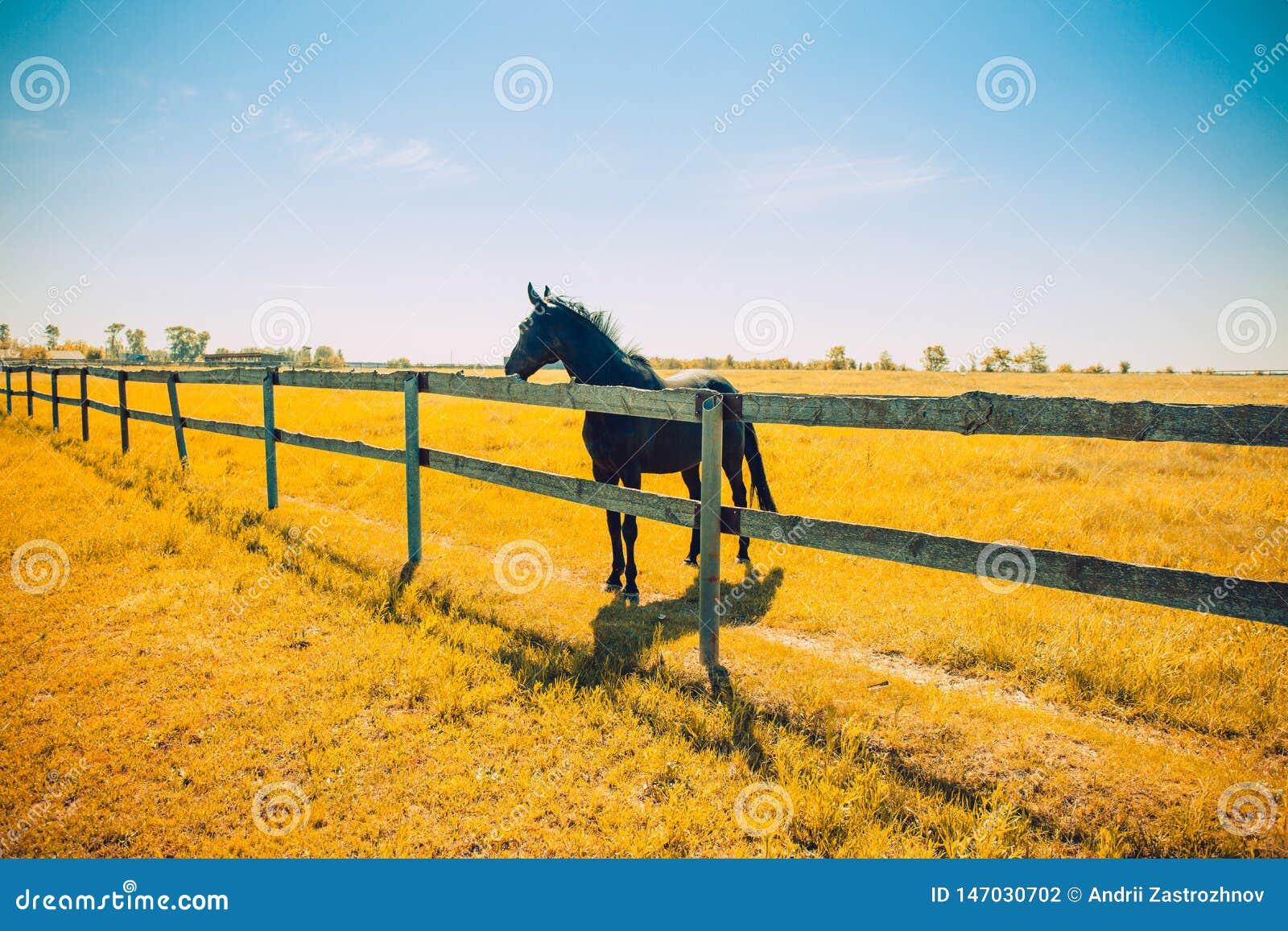 Koński ogier i gospodarstwa rolnego ogrodzenie