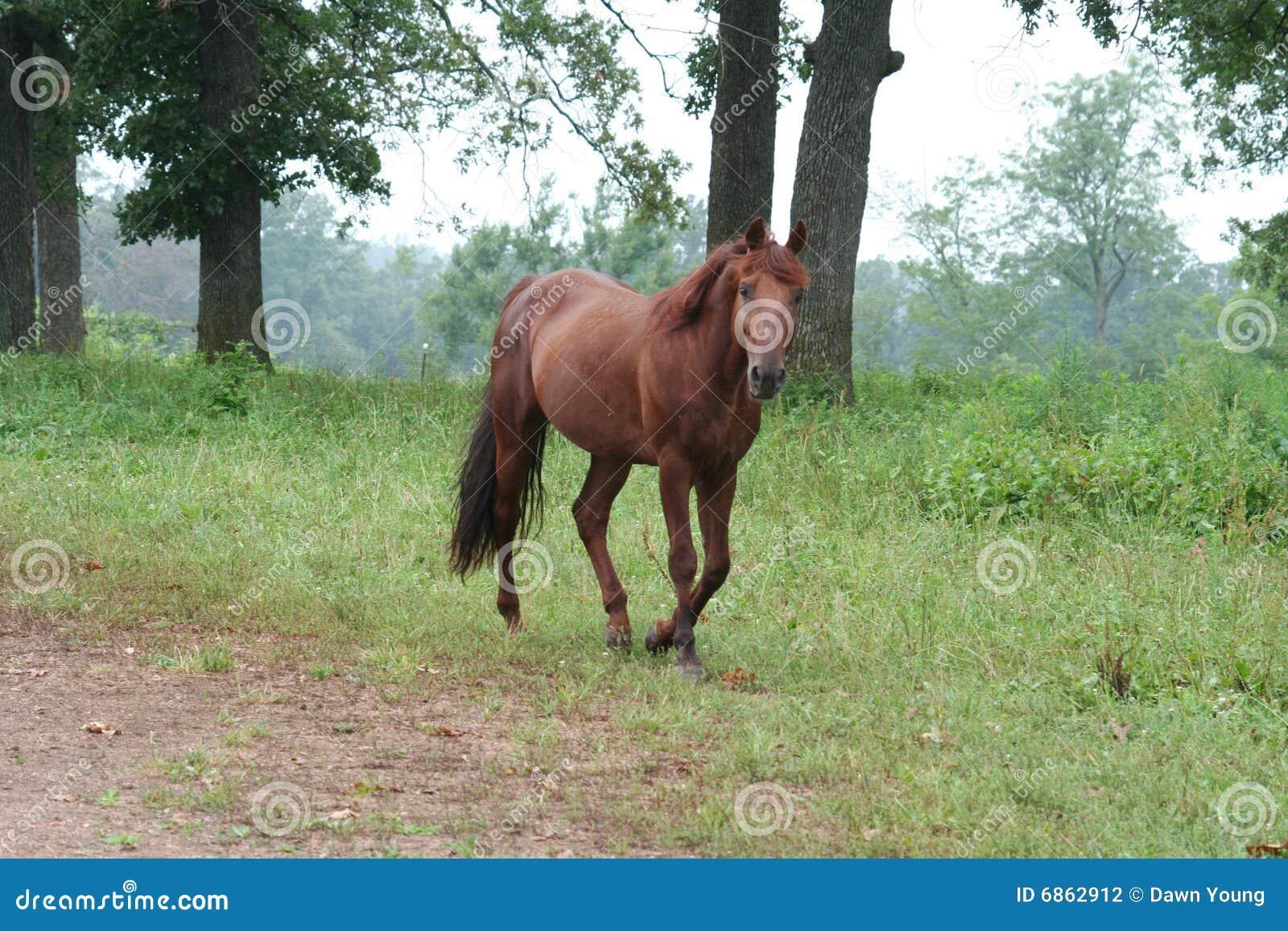 Koński paśnik