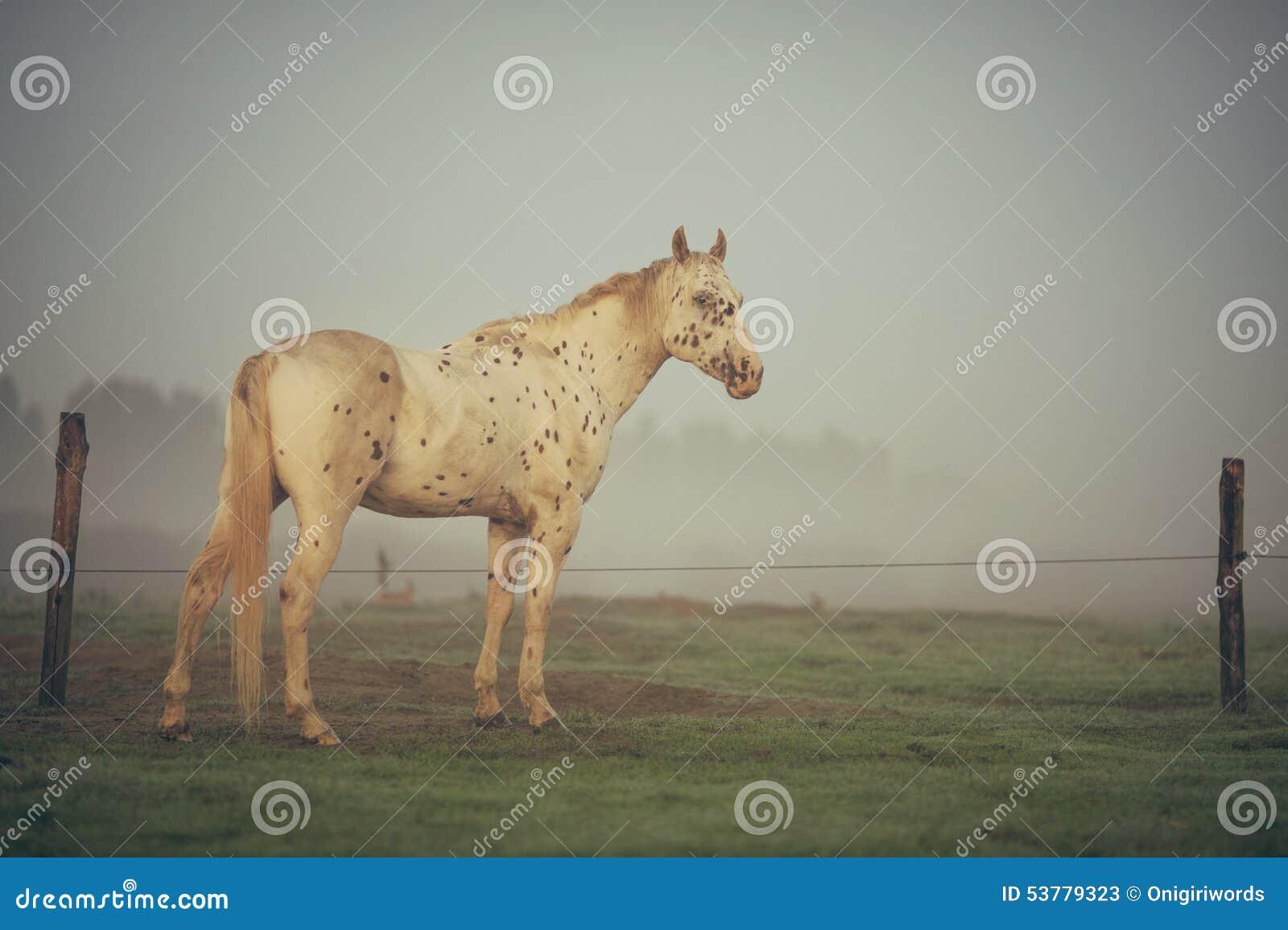 Koński portret