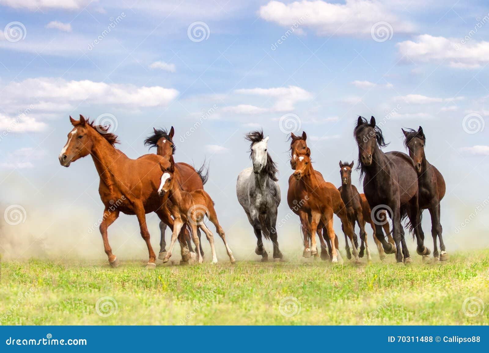 Koński stado bieg w pyle