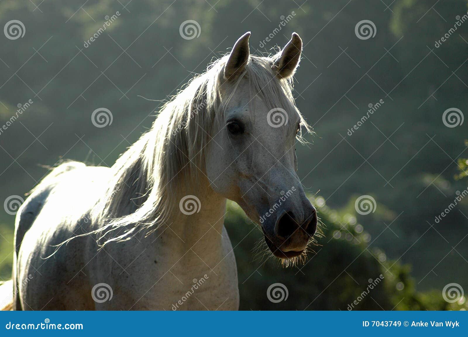 Koński zmierzch