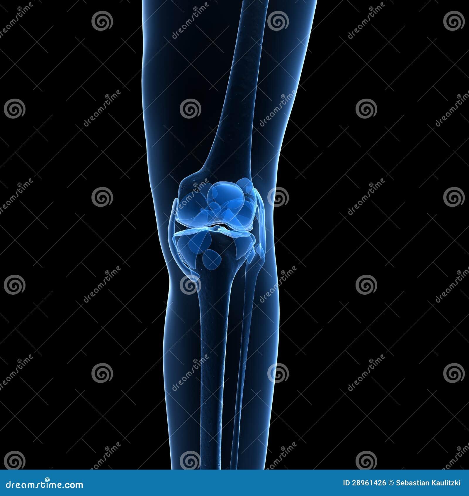 Kośćcowy kolano
