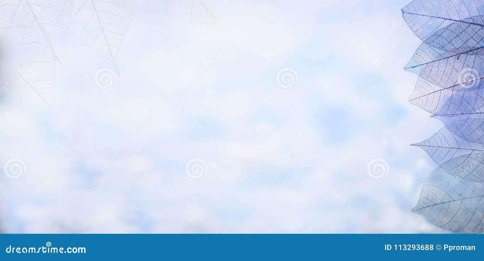 Kościec opuszcza na blured tle, zakończenie up