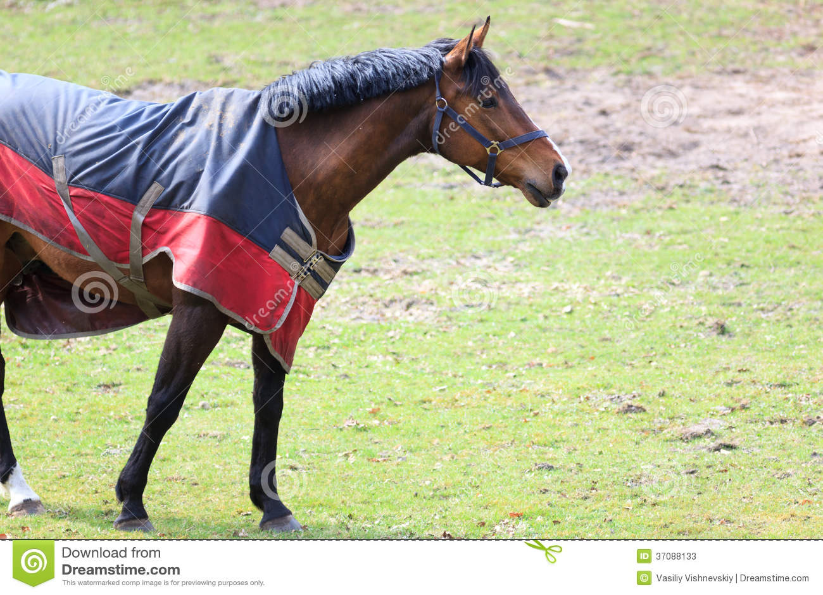 Download Koń. obraz stock. Obraz złożonej z kobylak, koń, odkładający - 37088133