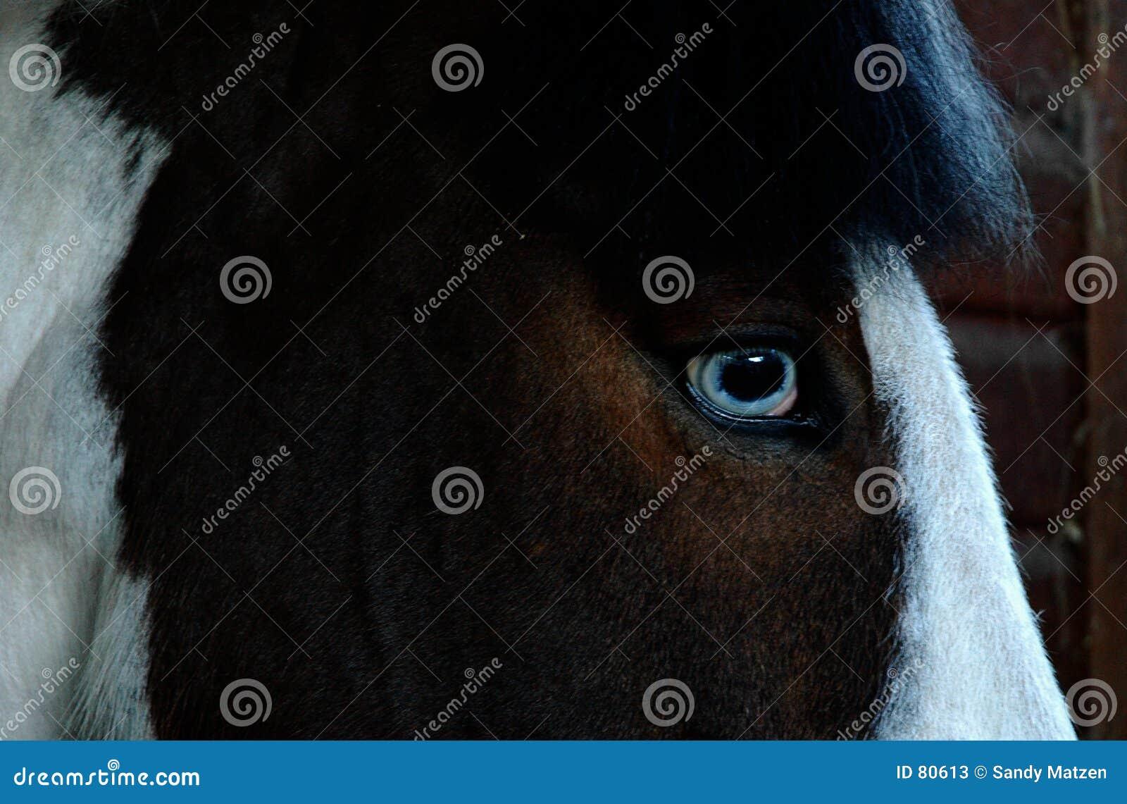 Koń jest oko
