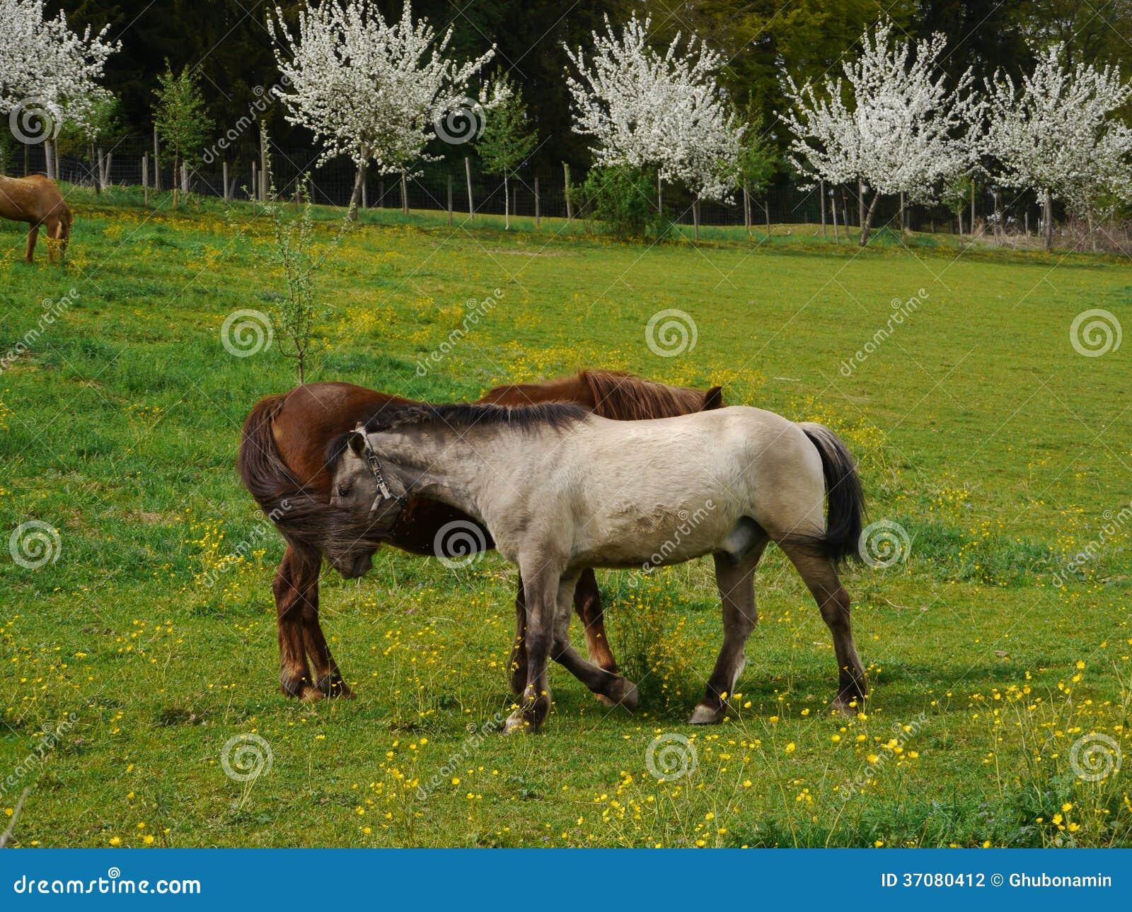 Download Koń na prerii zdjęcie stock. Obraz złożonej z błękitny - 37080412