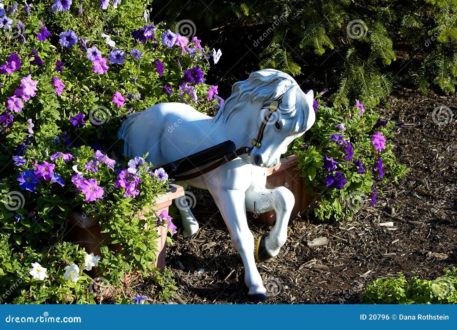 Koń ogrodu