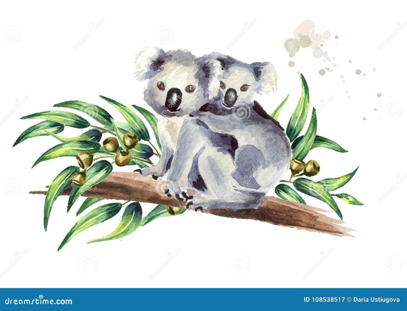 Koalan med behandla som ett barn sammanträde på eukalyptusfilialen som isoleras på vit bakgrund Dragen illustration för vattenfär