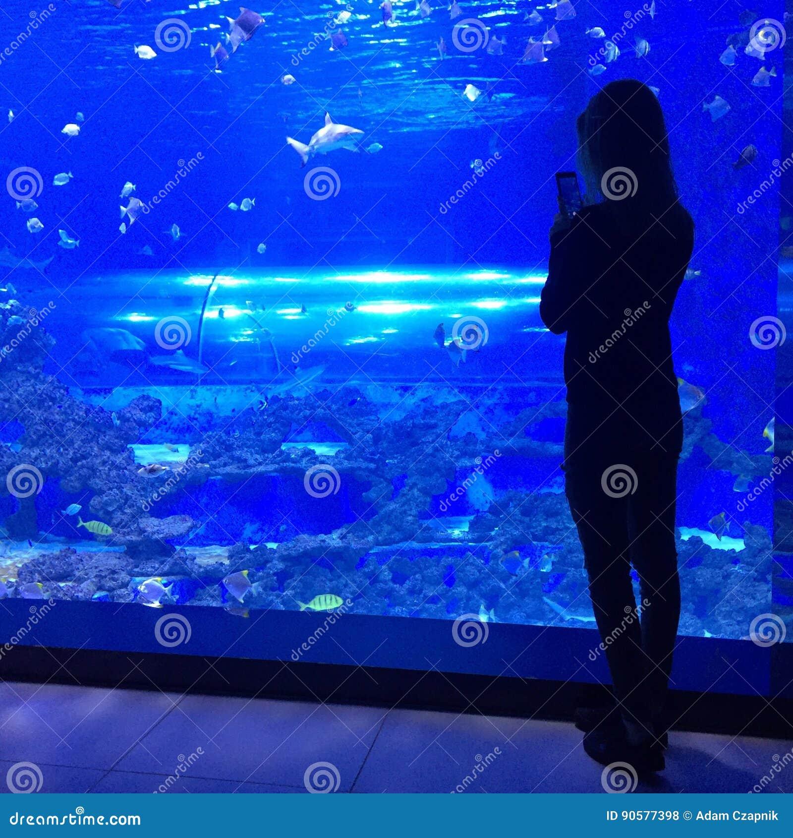 Kobieta bierze fotografię przy akwarium