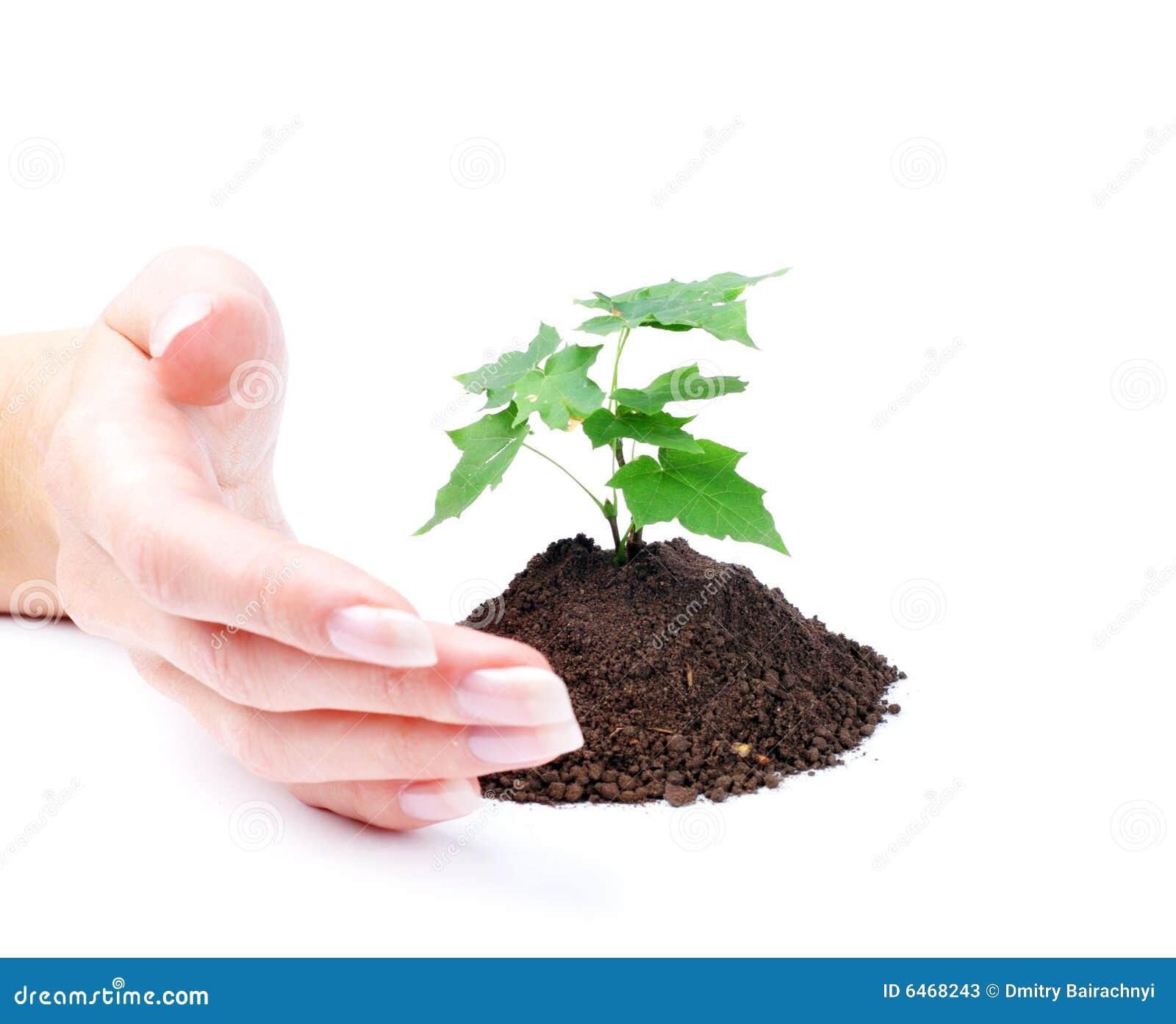 Kobieta flancy zielona ręce