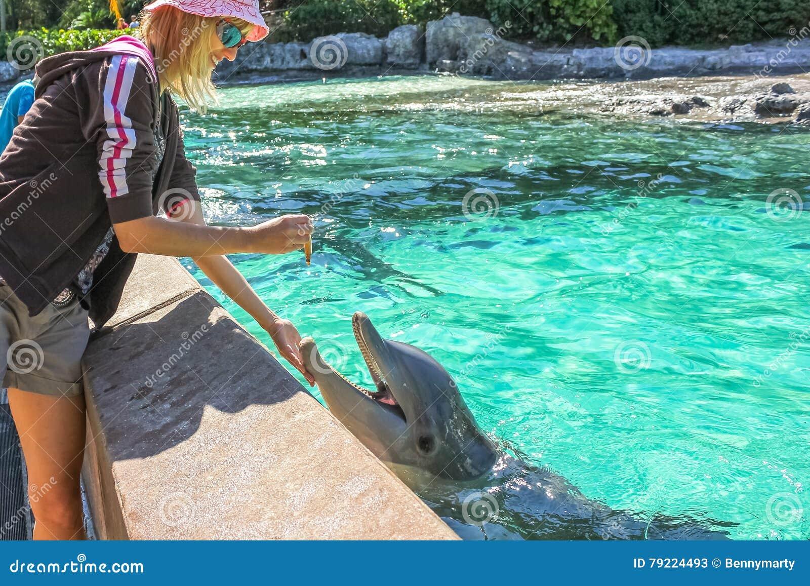 Kobieta karmi delfinu