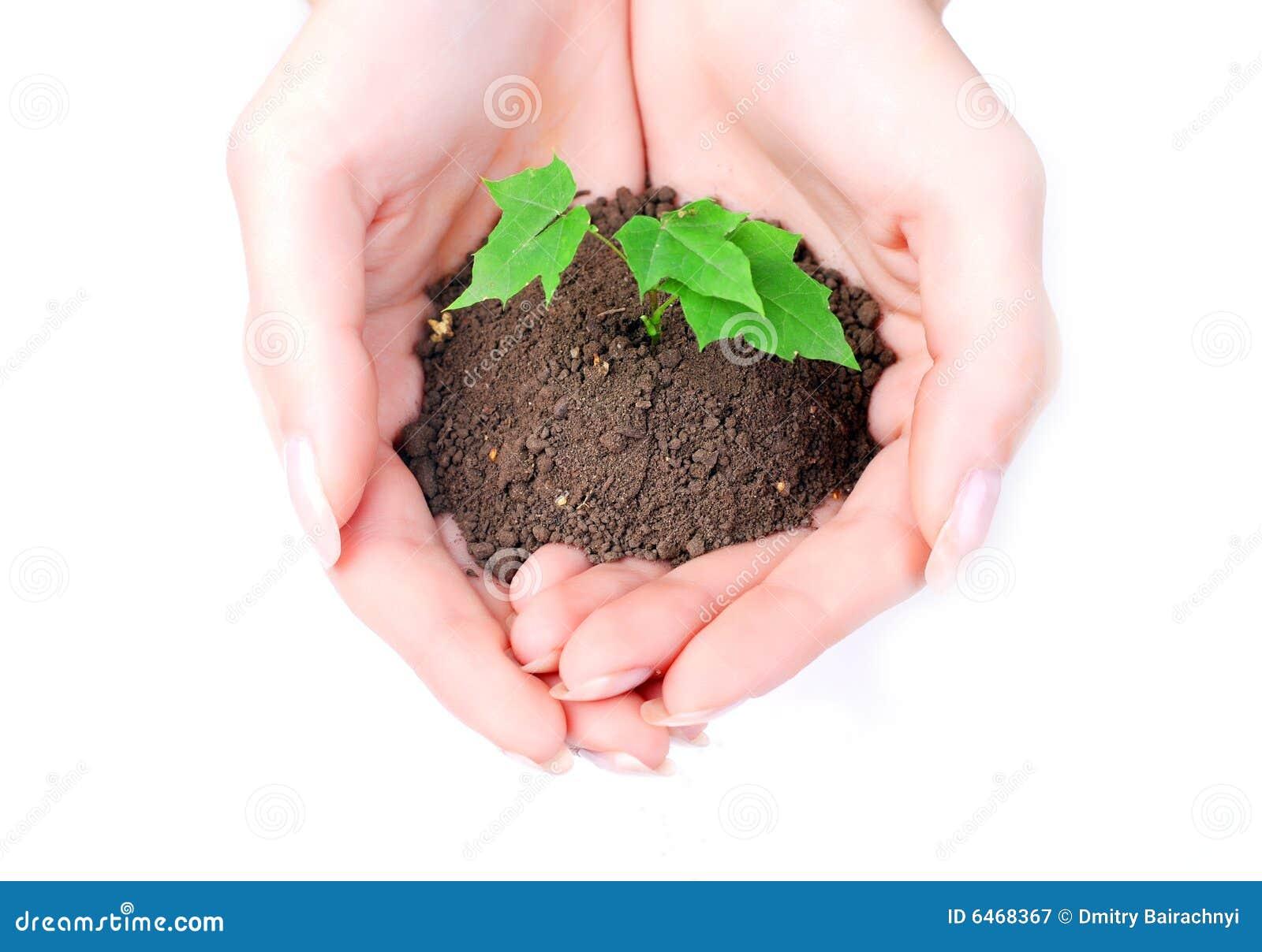 Kobieta kiełkowa zielone ręce