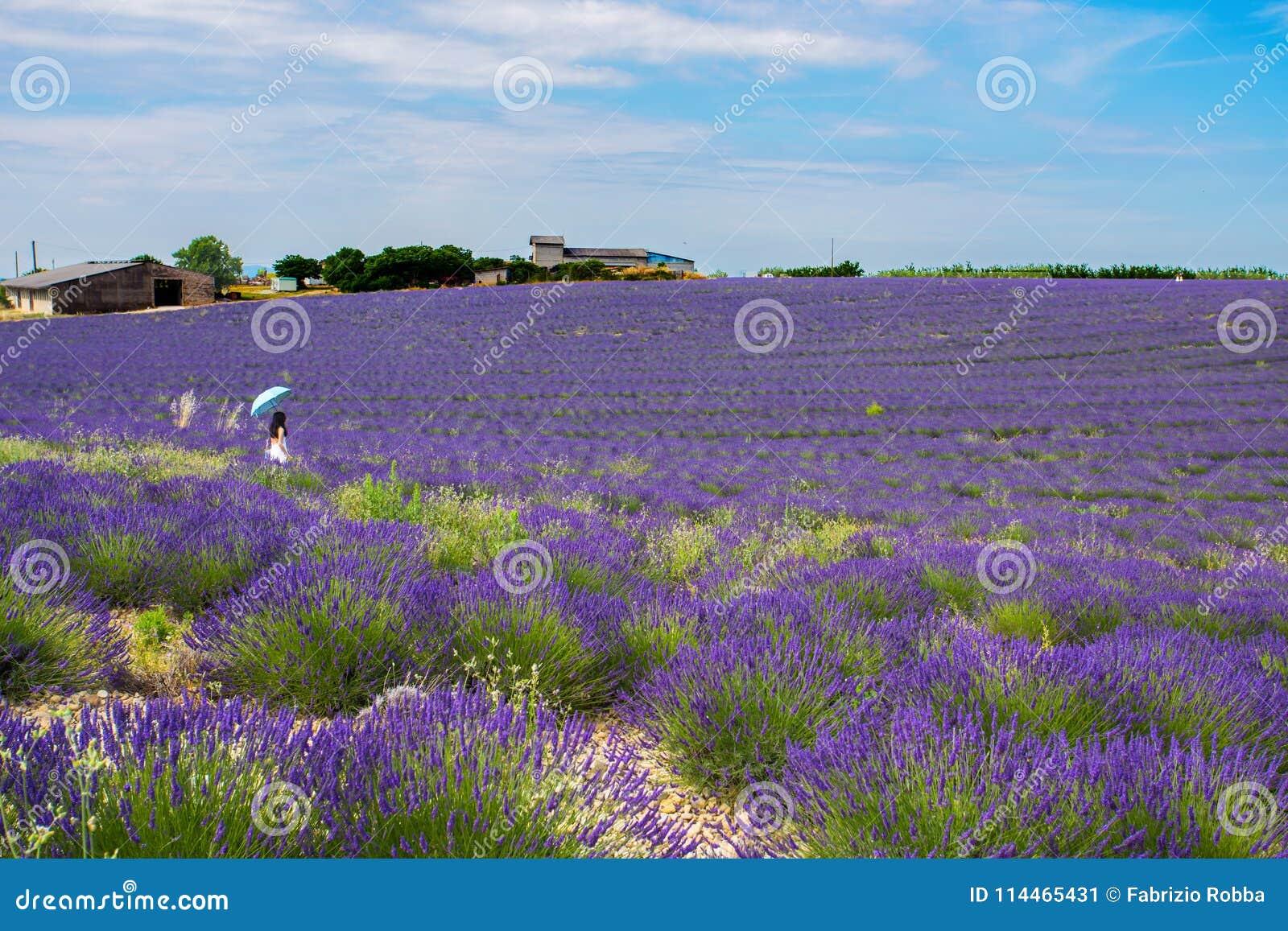 Kobieta odizolowywająca w levender polu przy Valensole, Provence, Francja