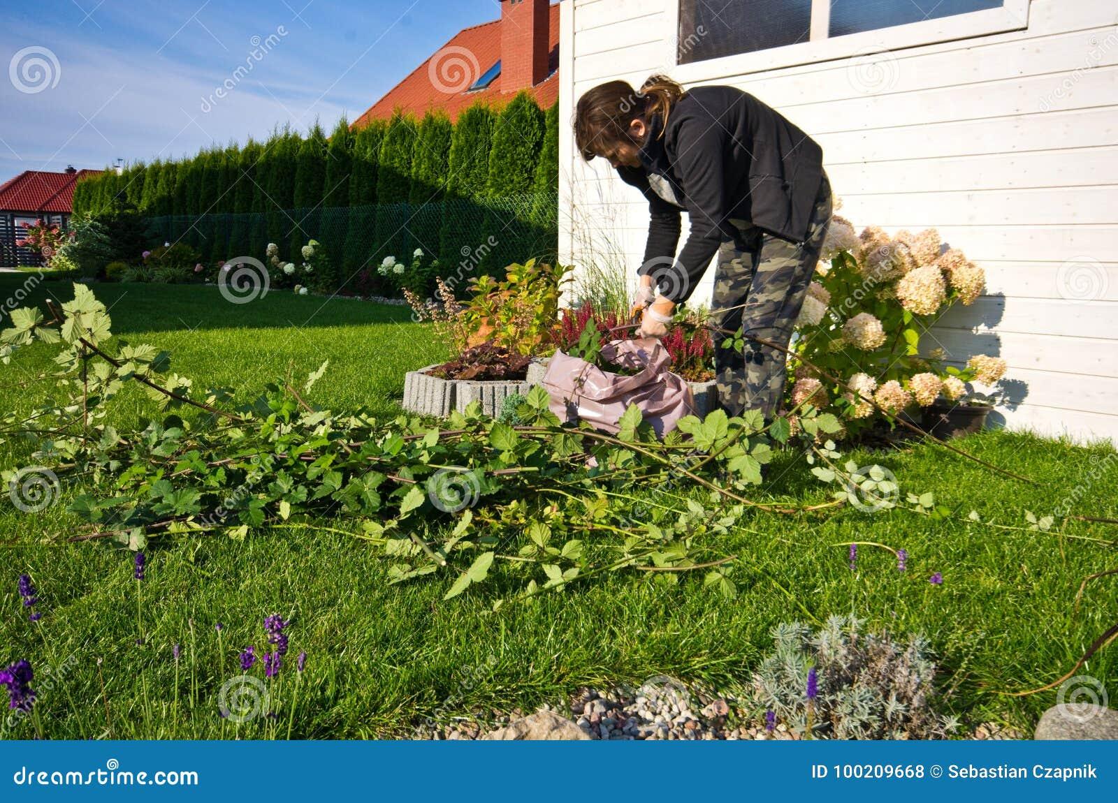 Kobieta pracuje w ogródzie, tnące nadmierne gałązki rośliny