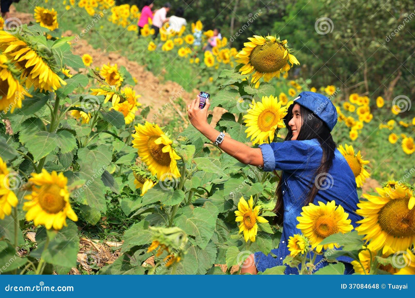 Download Kobieta Tajlandzki Portret Na Słonecznika Polu Przy Saraburi Tajlandia Zdjęcie Stock - Obraz złożonej z kolor, nakrętka: 37084648